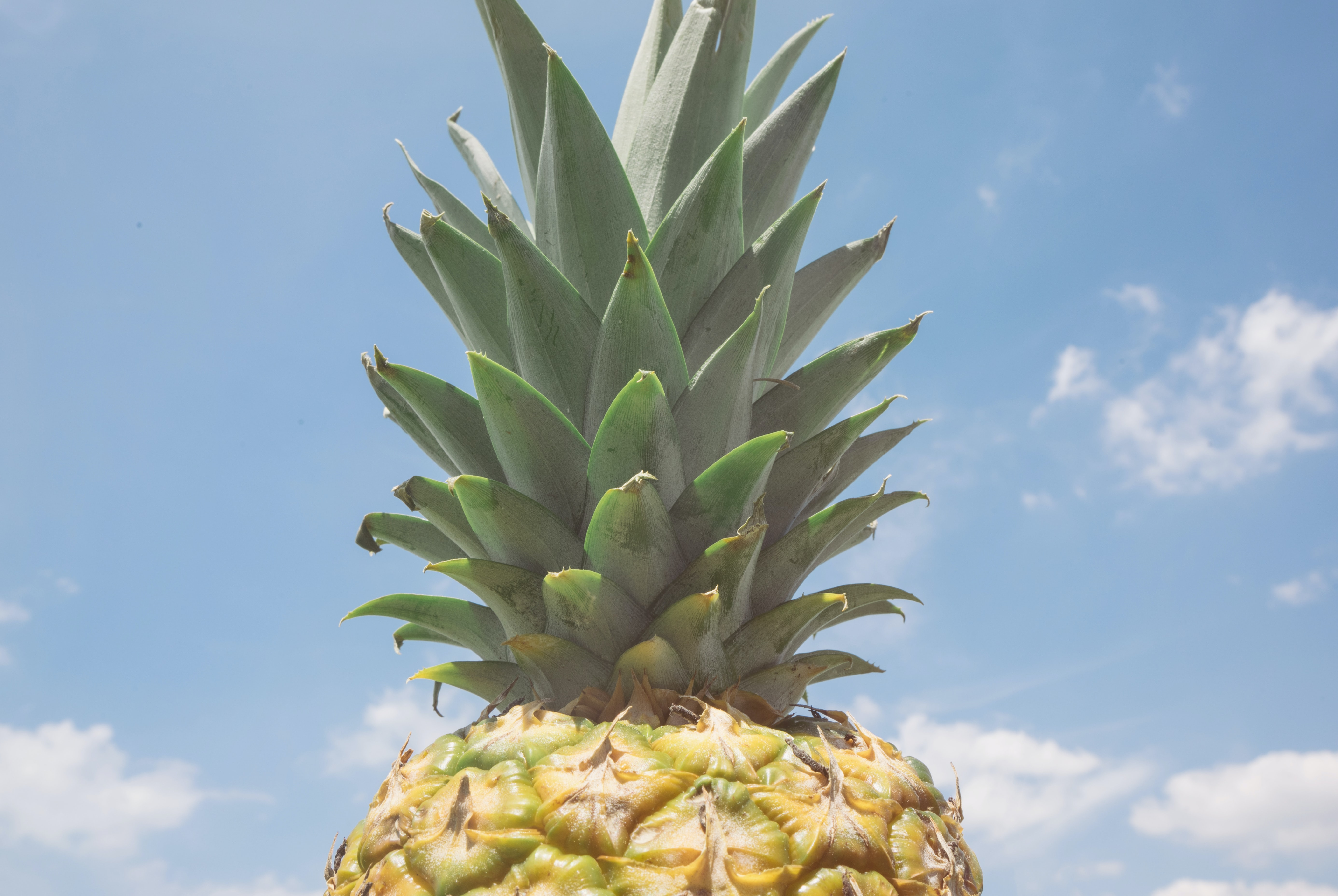 Top of a fresh pineapple against a blue sky
