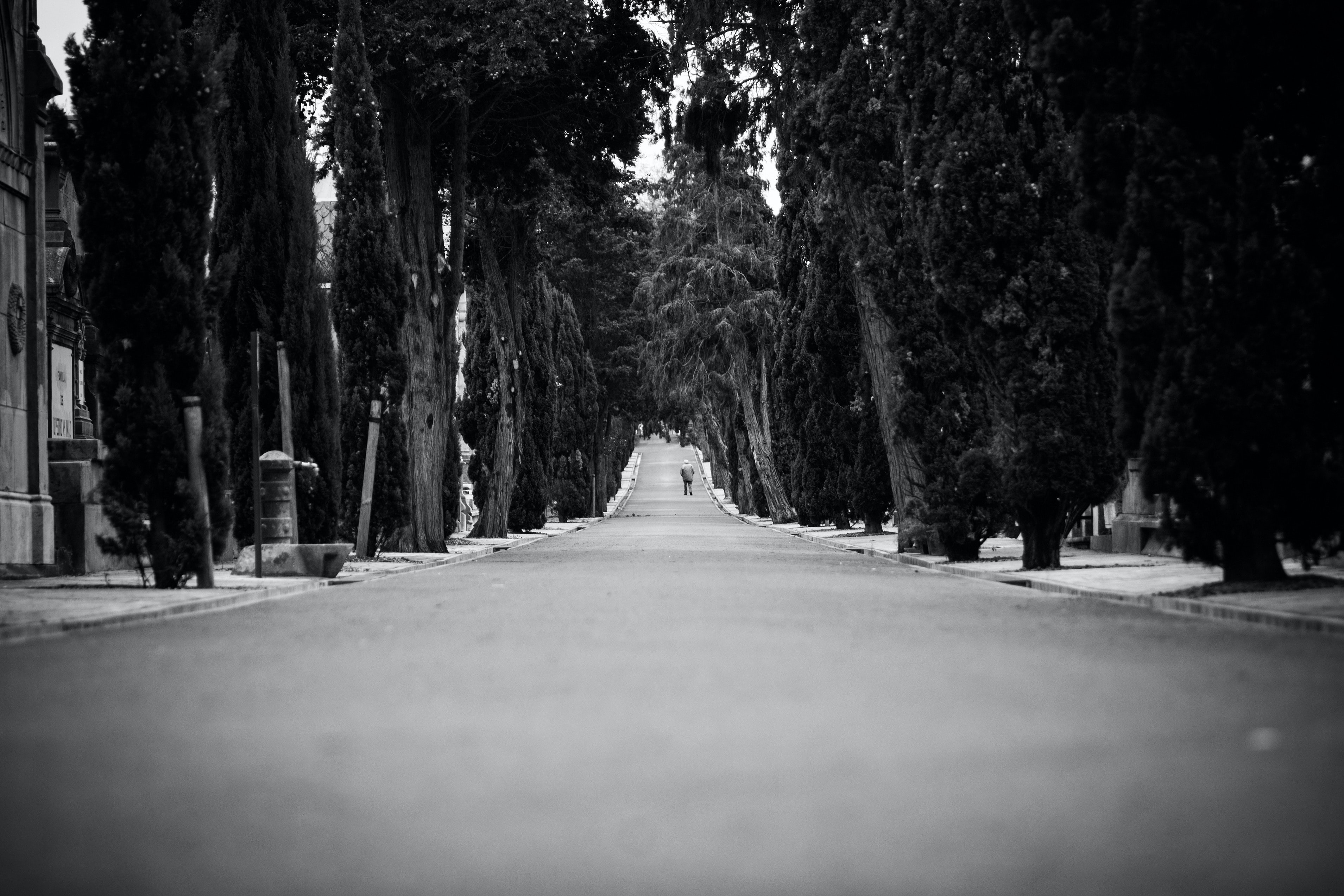 Black and white shot of person in distance walking on tree lined road in Polloe Plaza