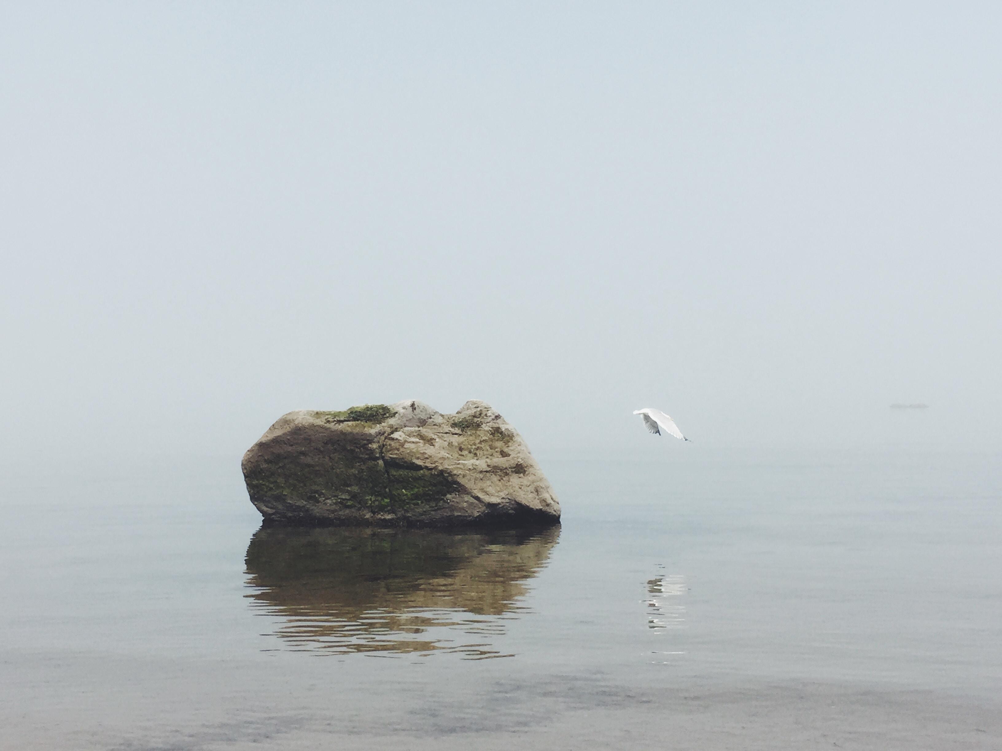 Seagull flies off of lone boulder on a foggy seashore