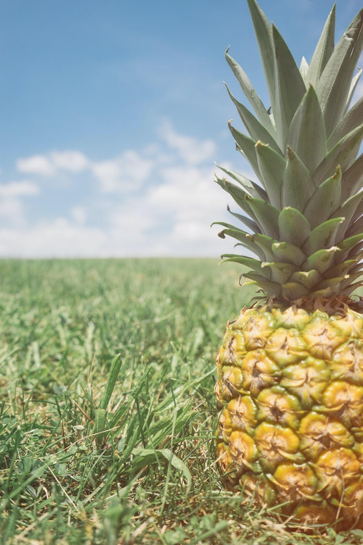 pineapple fruit on grass