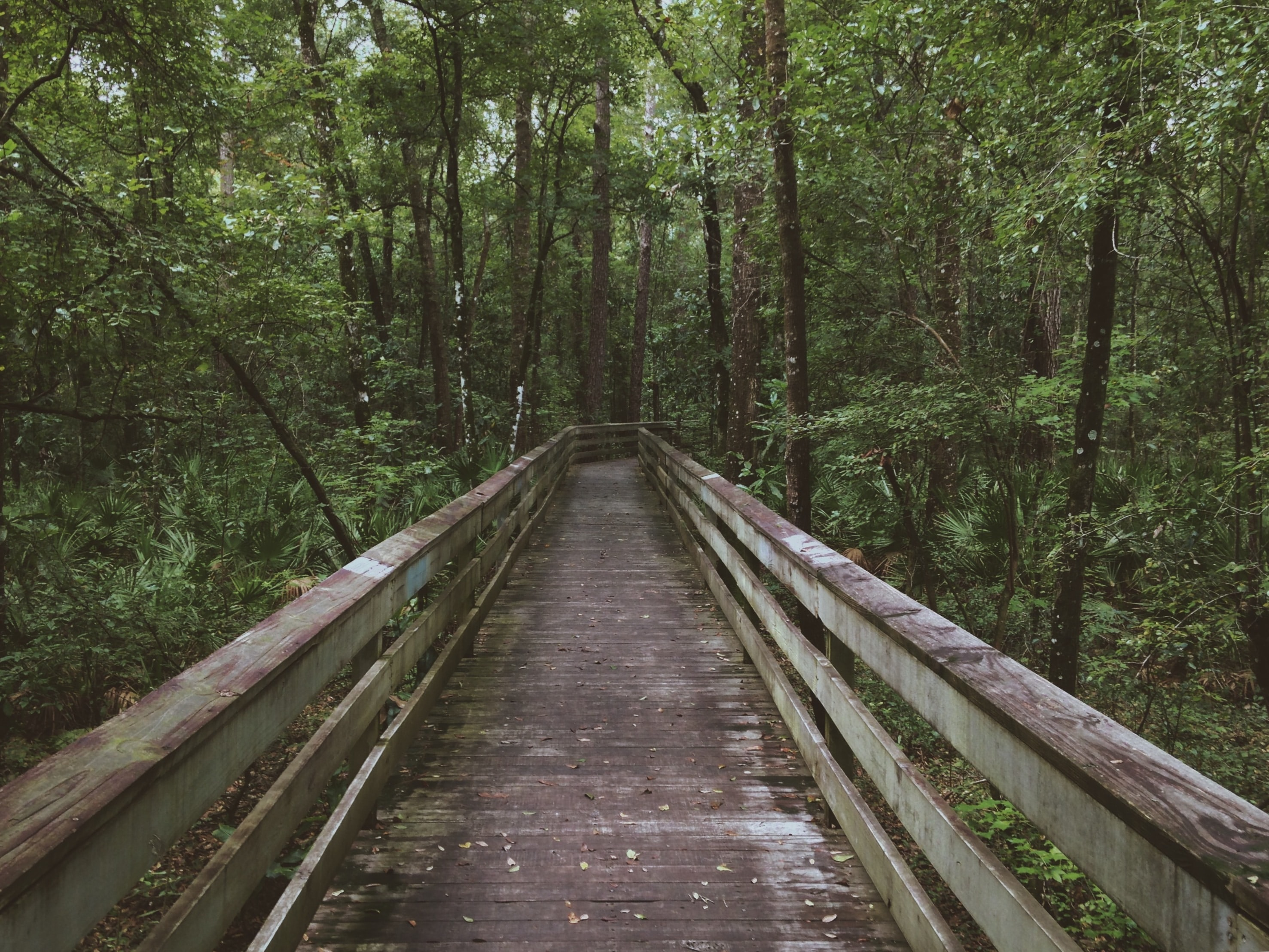 A dilapidated boardwalk in a forest
