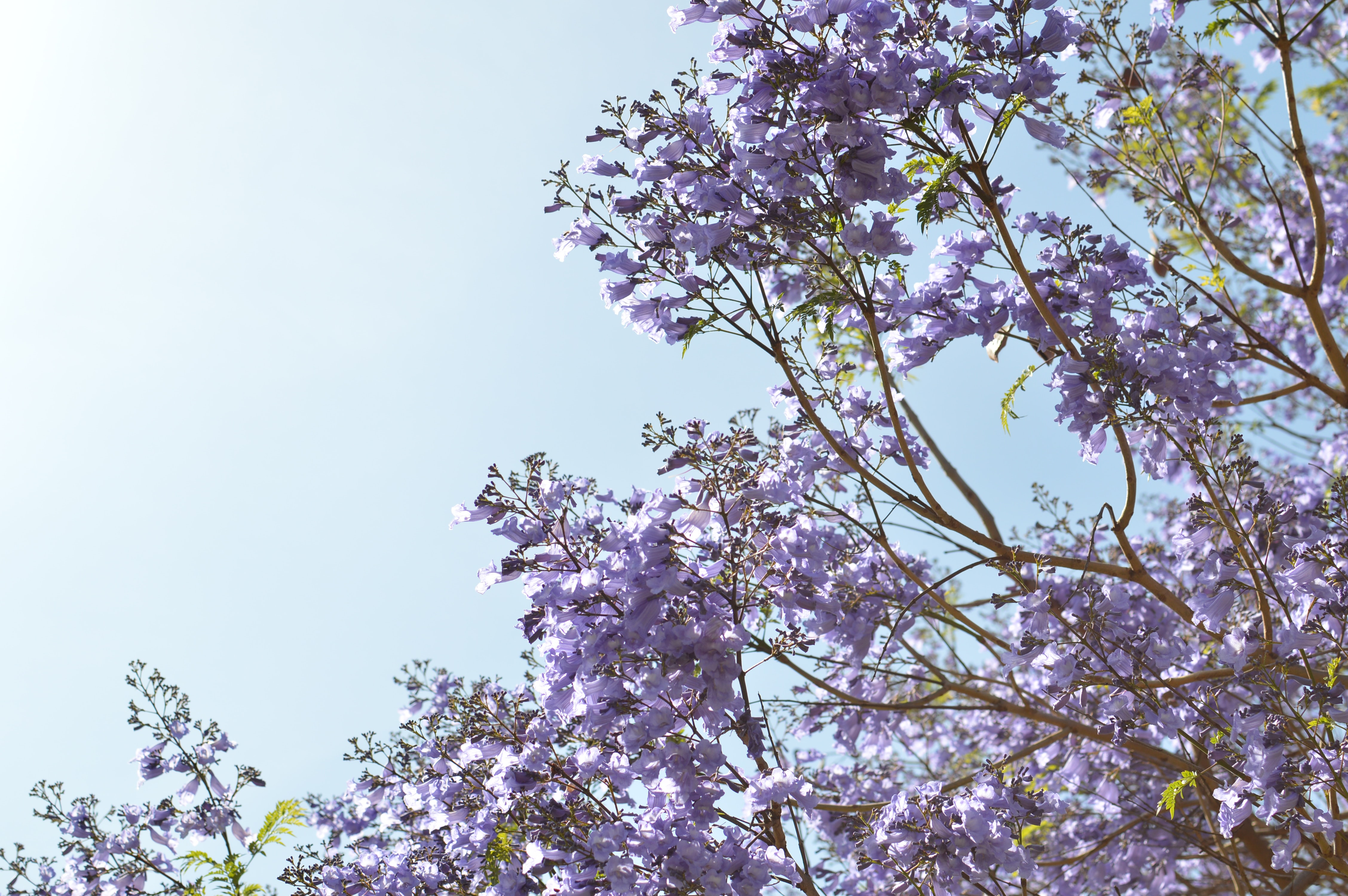 purple flowering tree low-angle photography at daytime