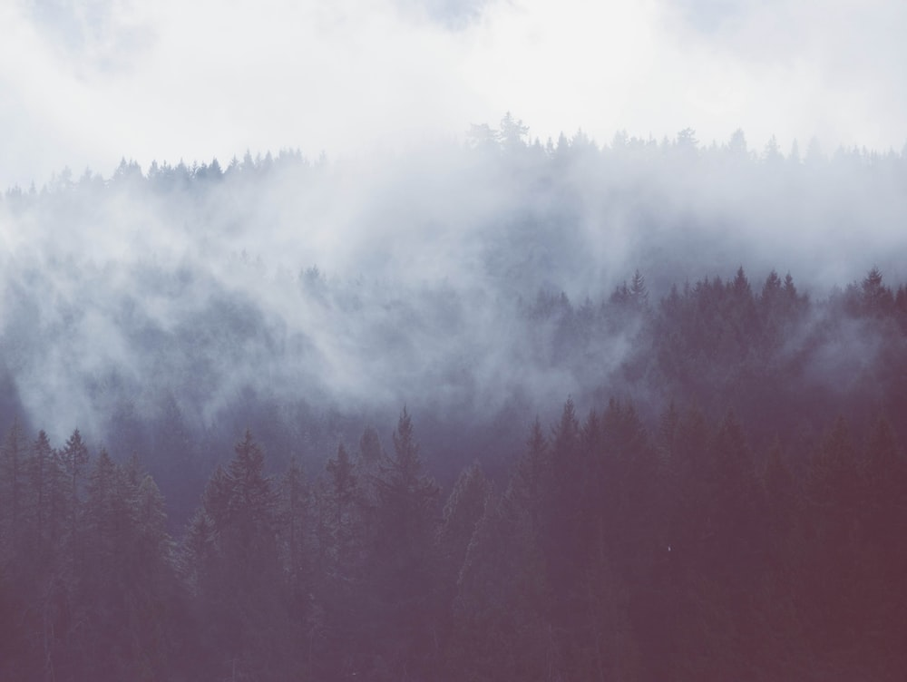 forest mists