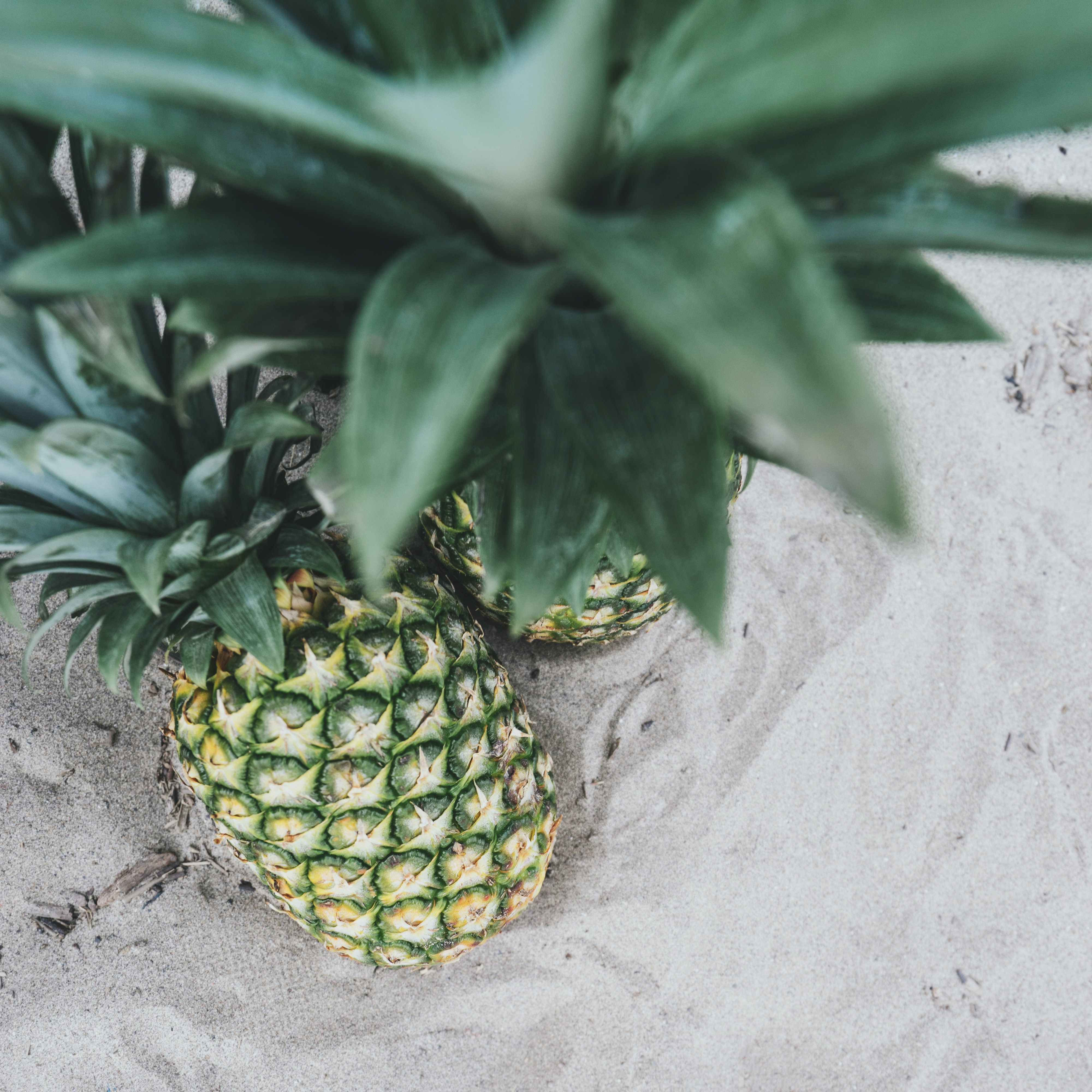 Top view perspective of two pineapples.