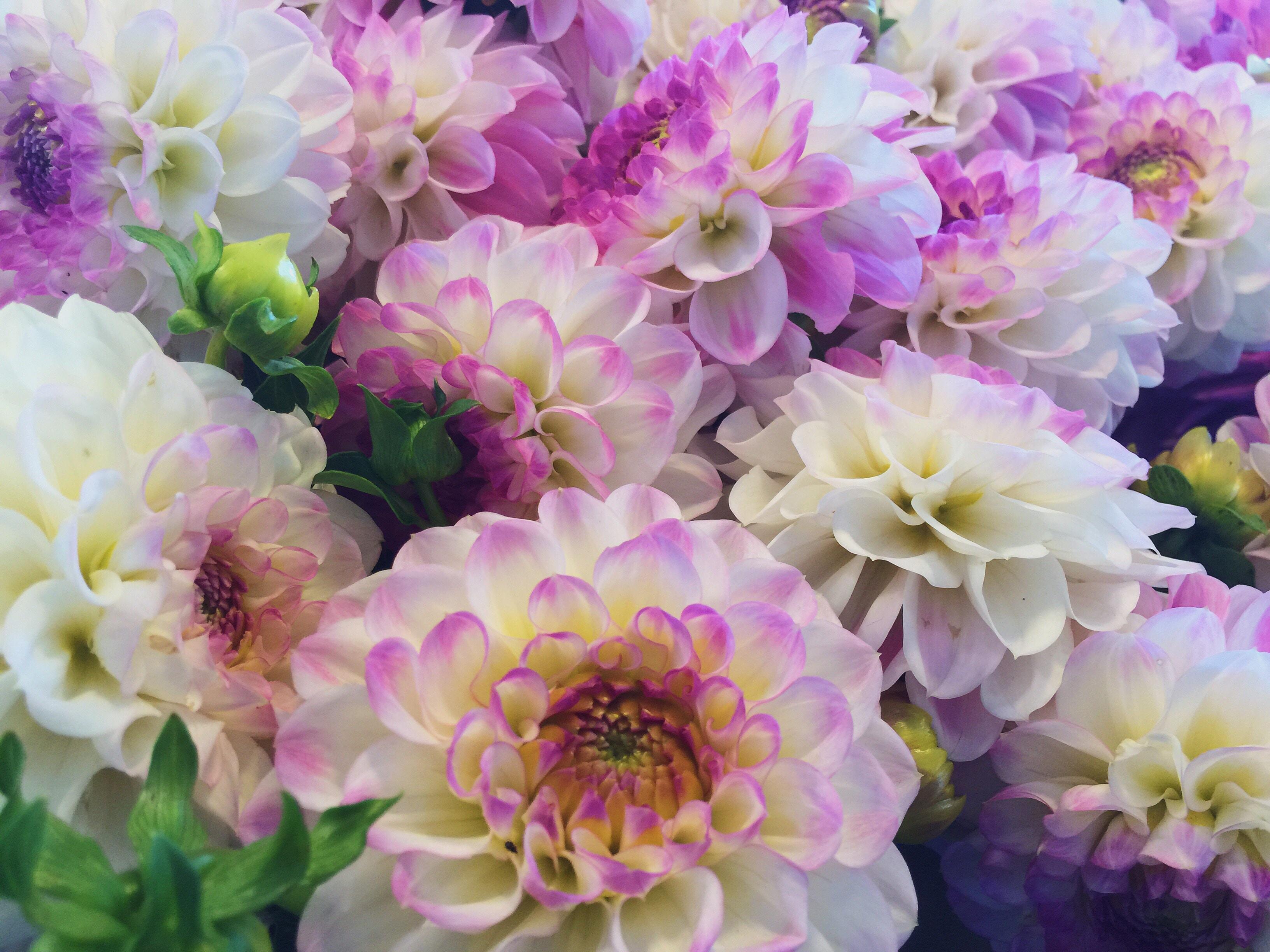 Beautiful white, purple and yellow toned flowers.