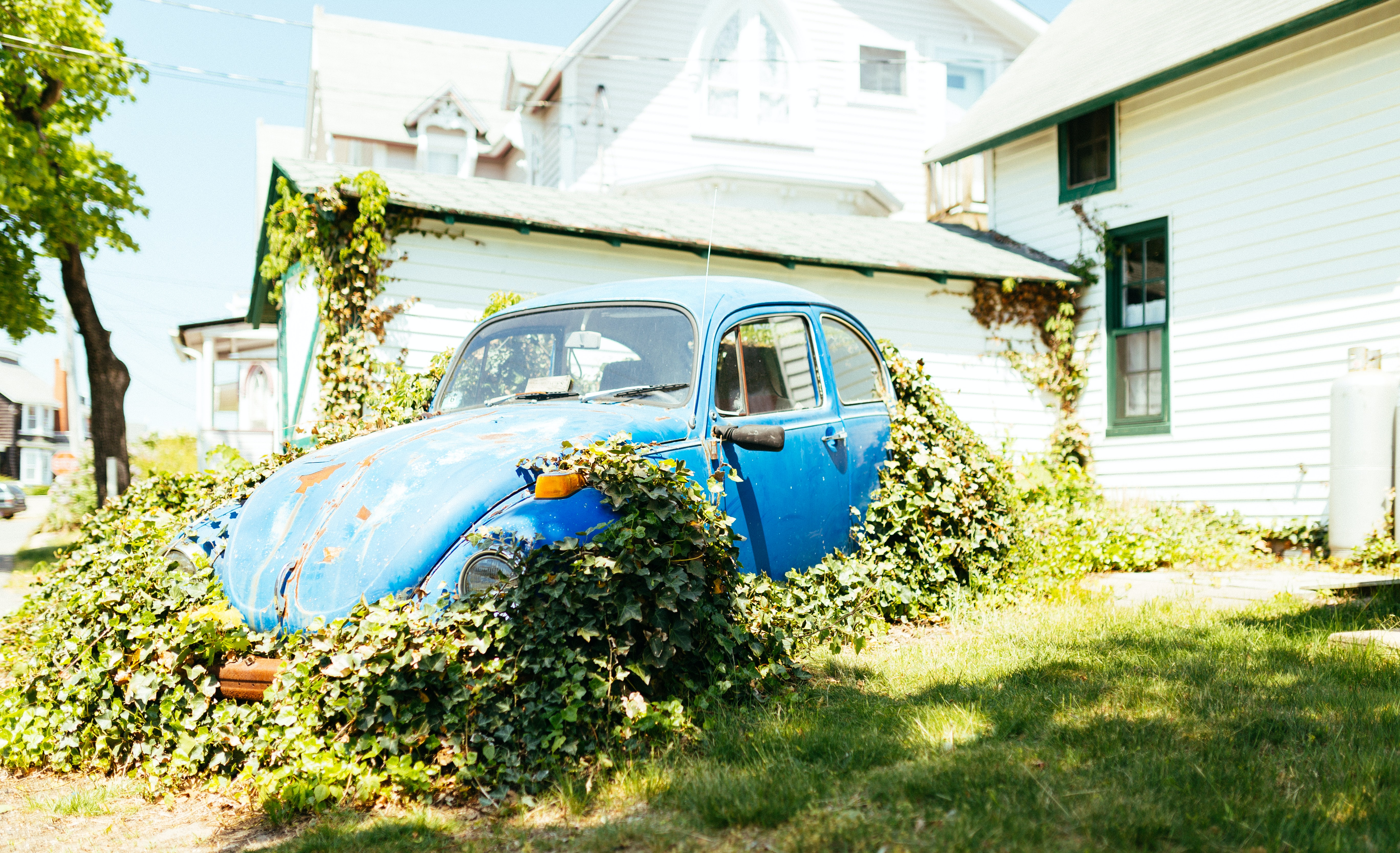 Vintage blue Volkswagen Beetle parked in front yard with vines growing on it