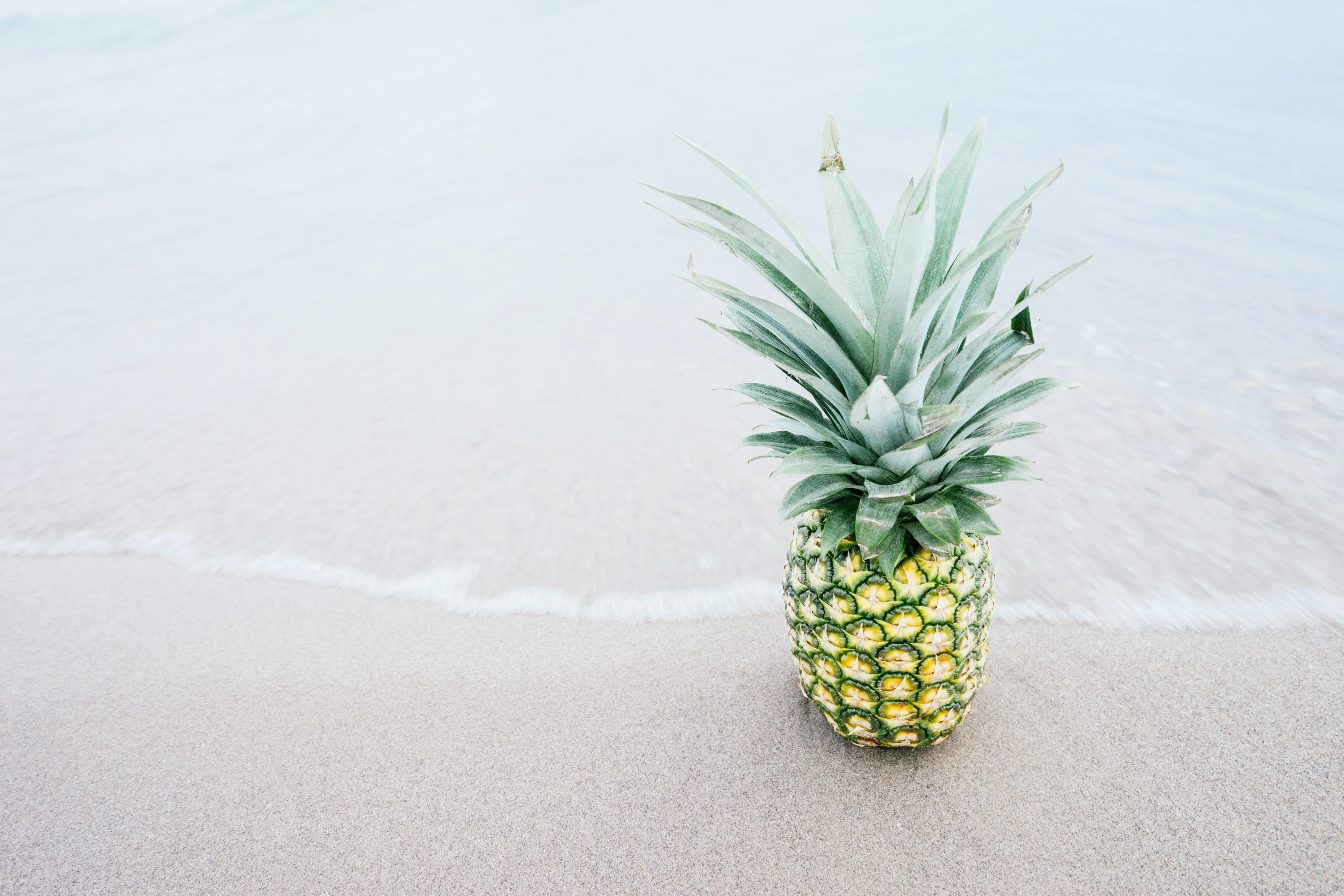 photography of pineapple fruit beside seashore during daytime