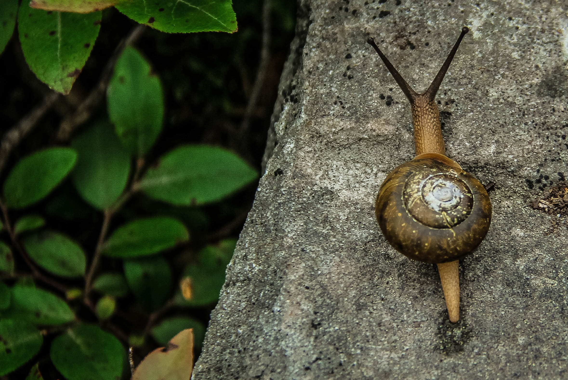 brown snail in rule of thirds photography