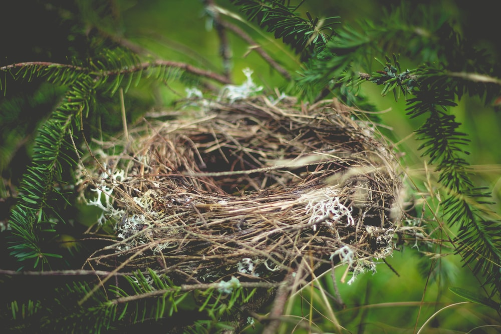 brown bird nest on tree branch