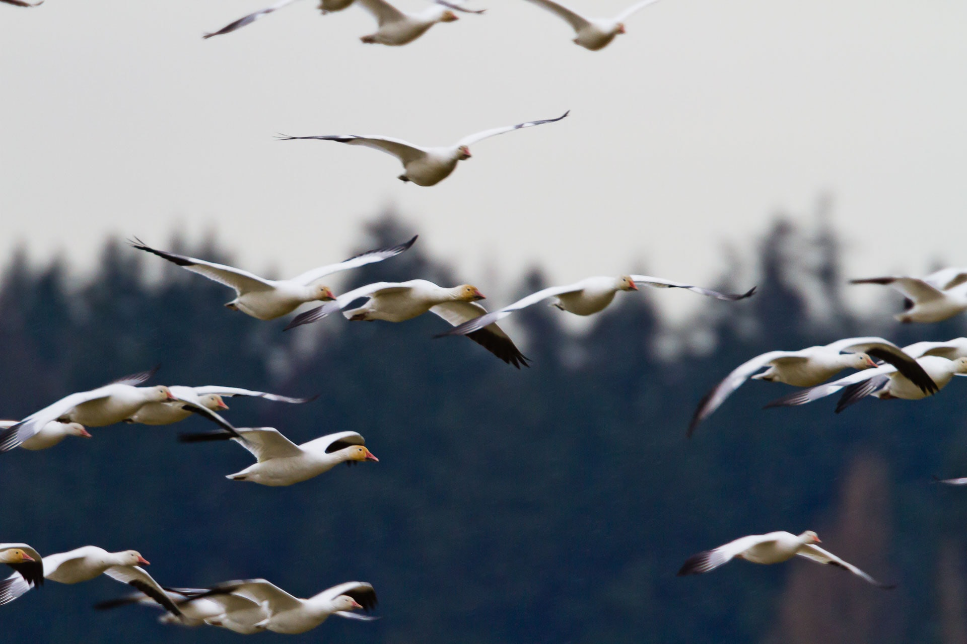 flock of seagull during daytime