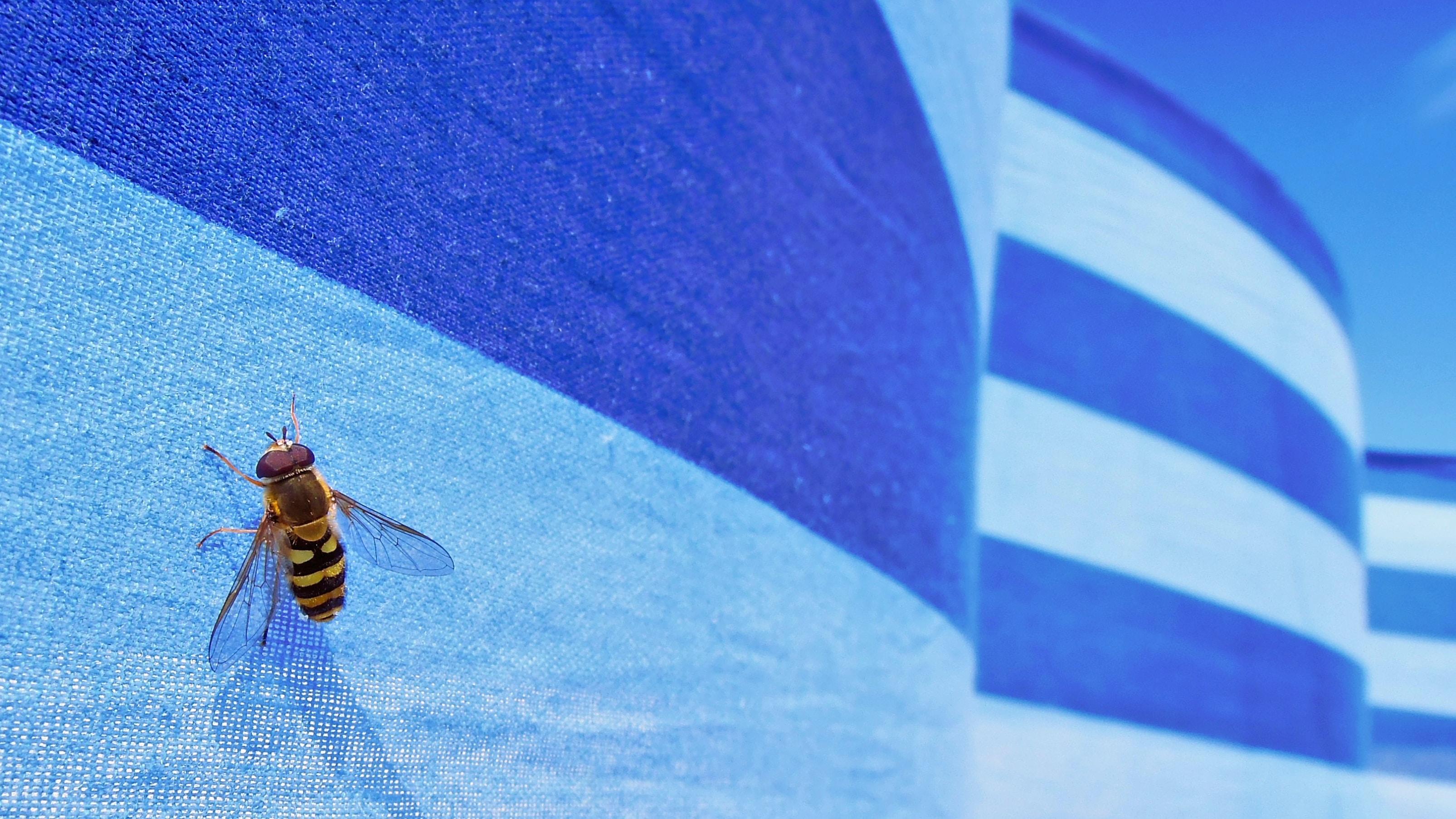bee on flag