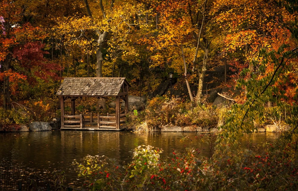 lake garden with shed