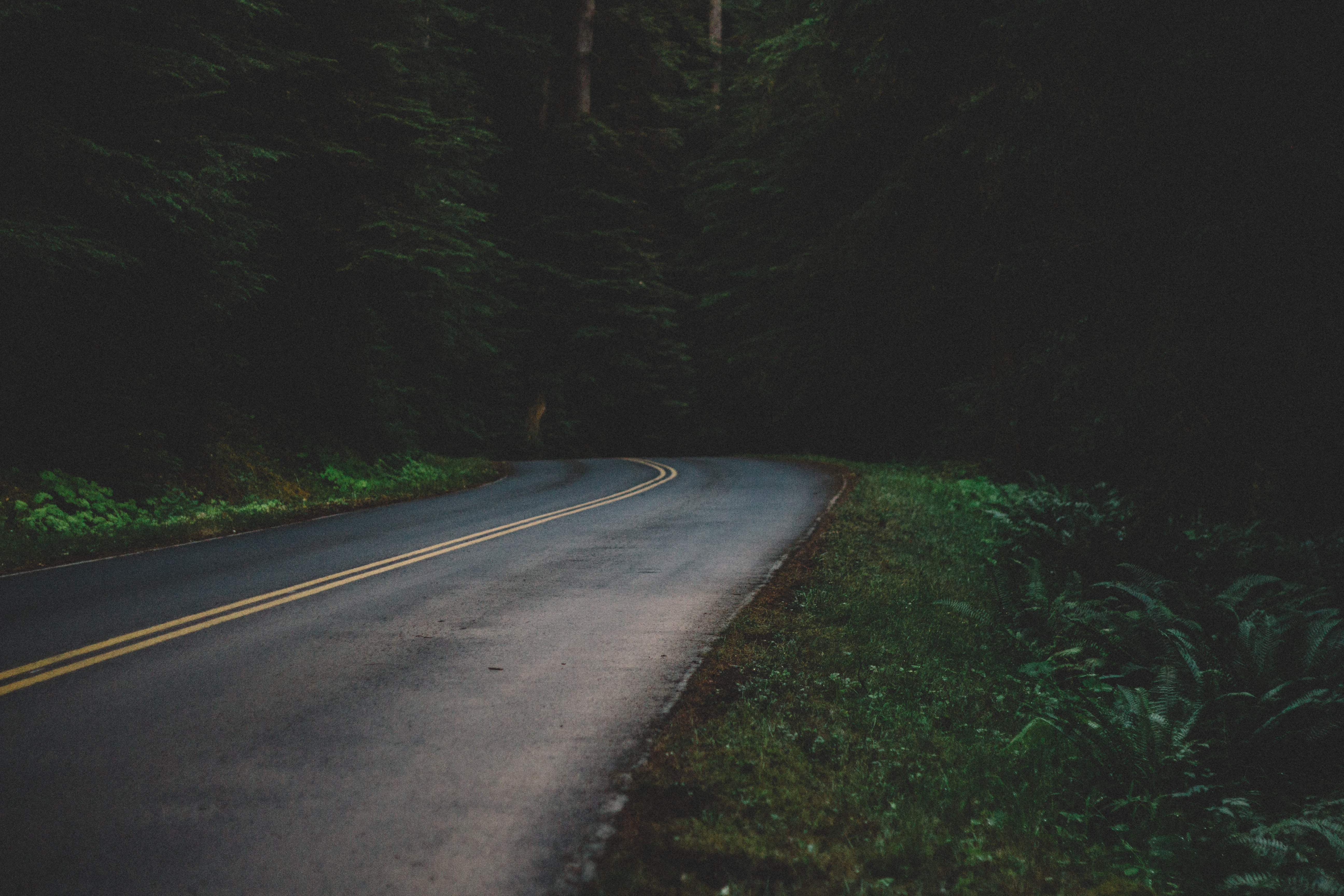 Open road winds through lush green trees in the forest