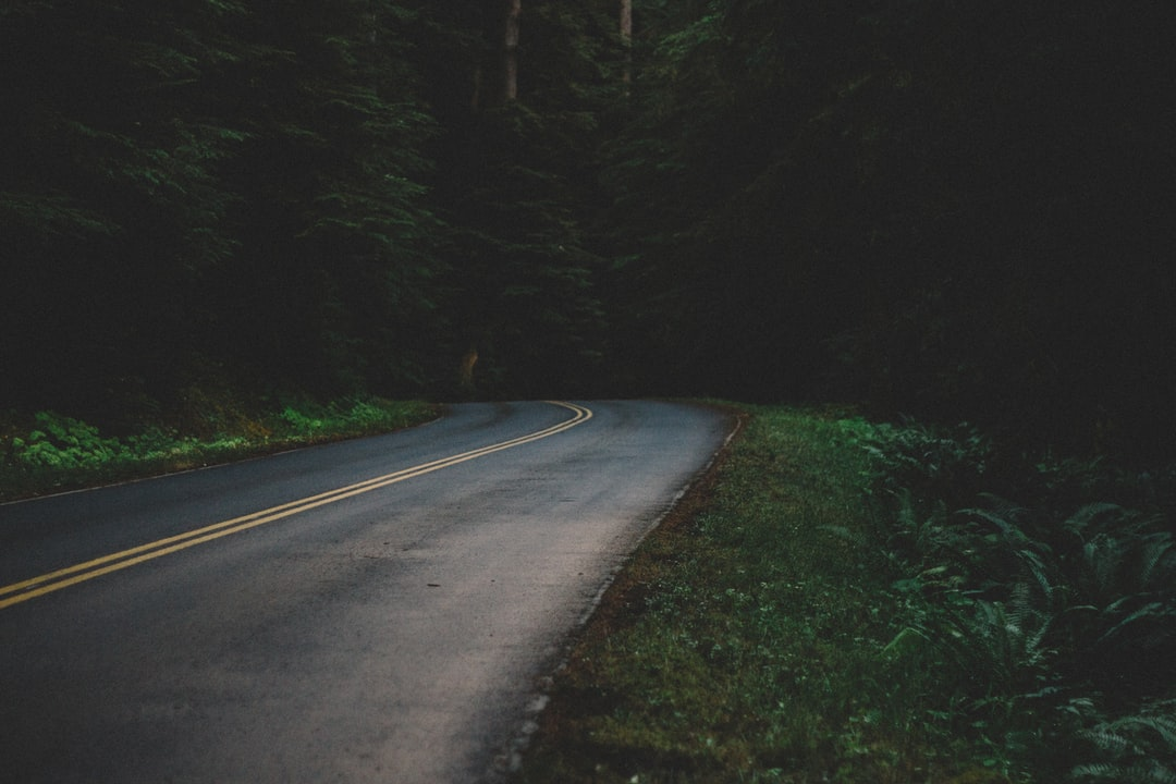 Road bend in a dark forest