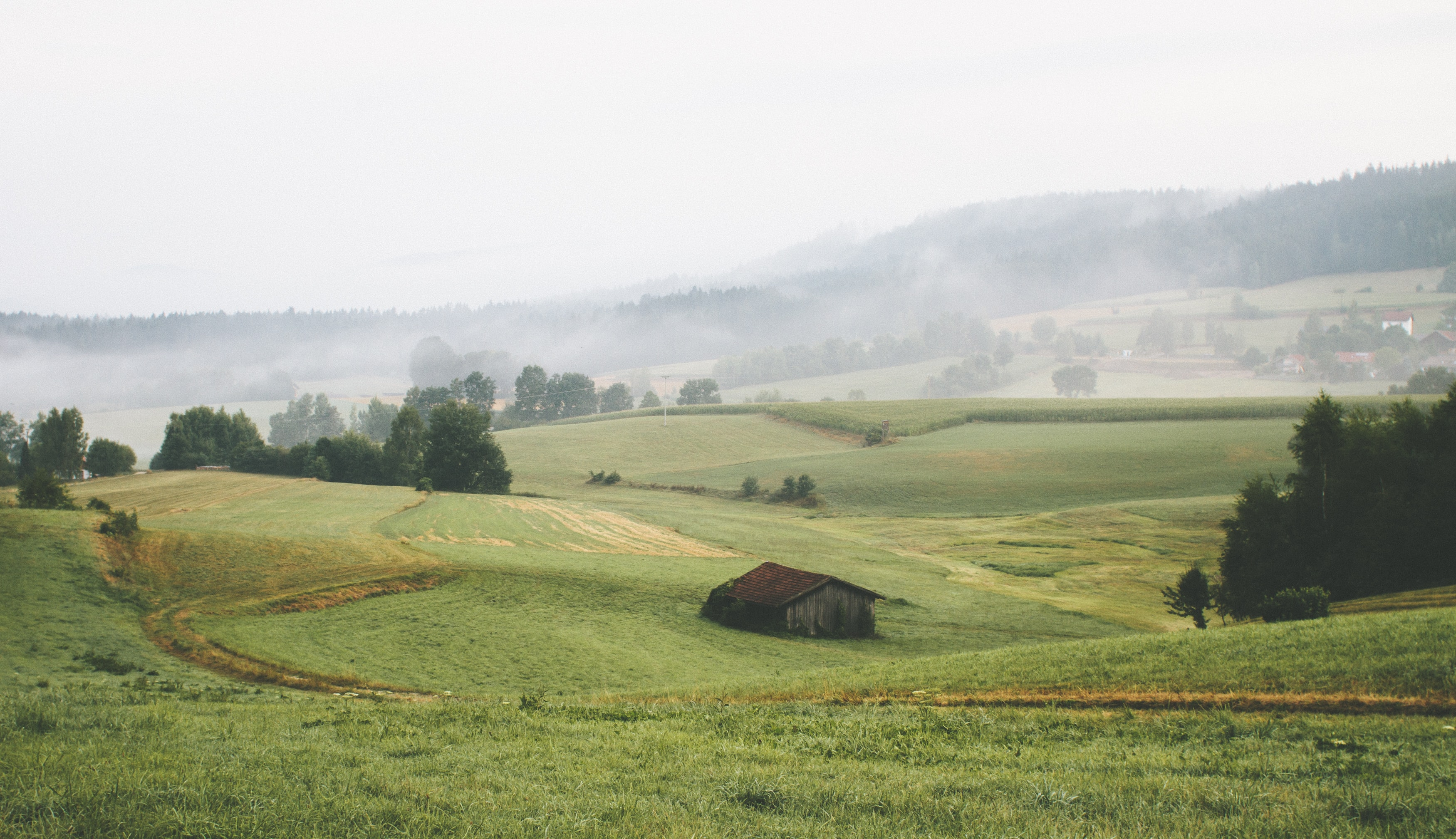 An old barn in a green field with mist obscuring the forest in the distance