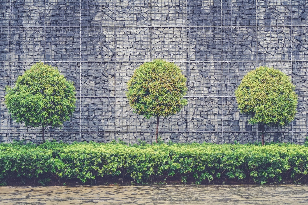 green leafed trees and plants beside chain fence