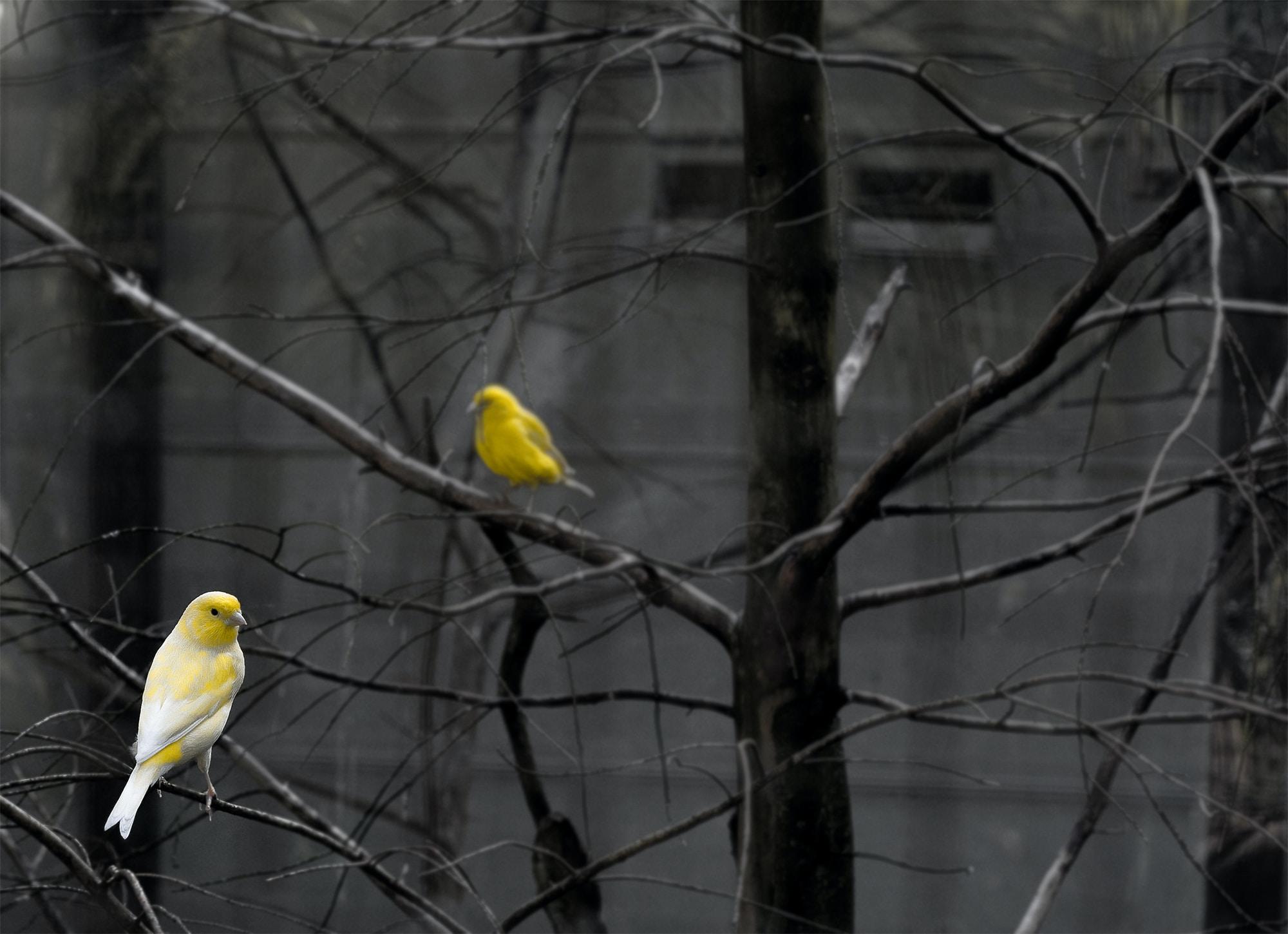 yellow bird on tree branch