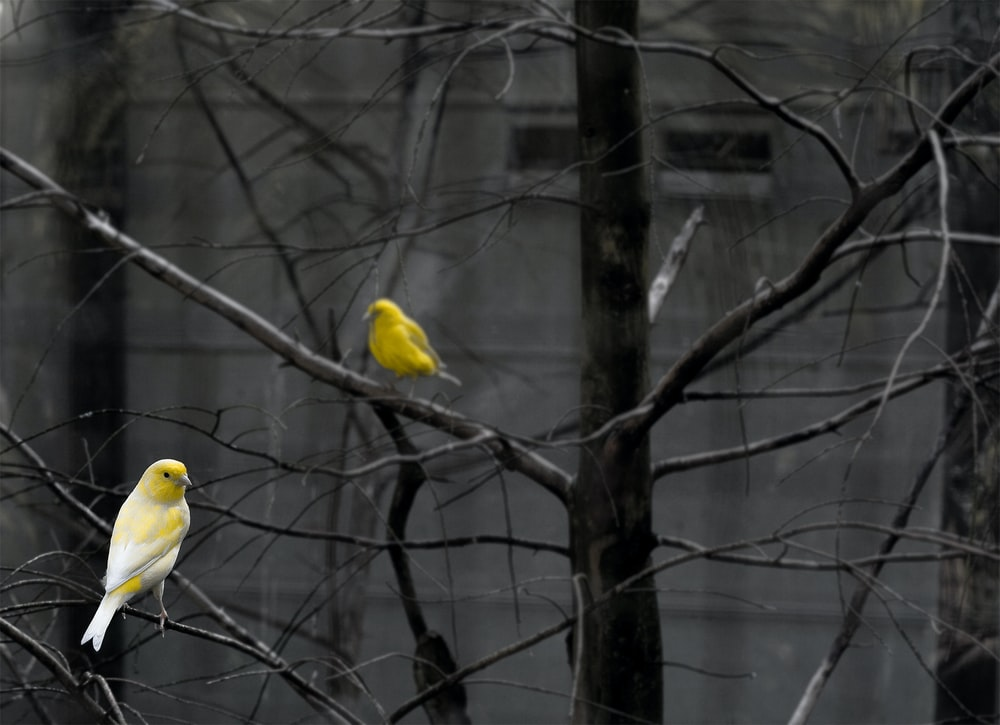yellow bird on tree branch
