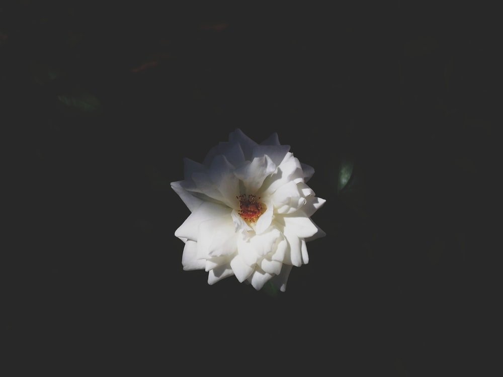 photo of white petaled flower