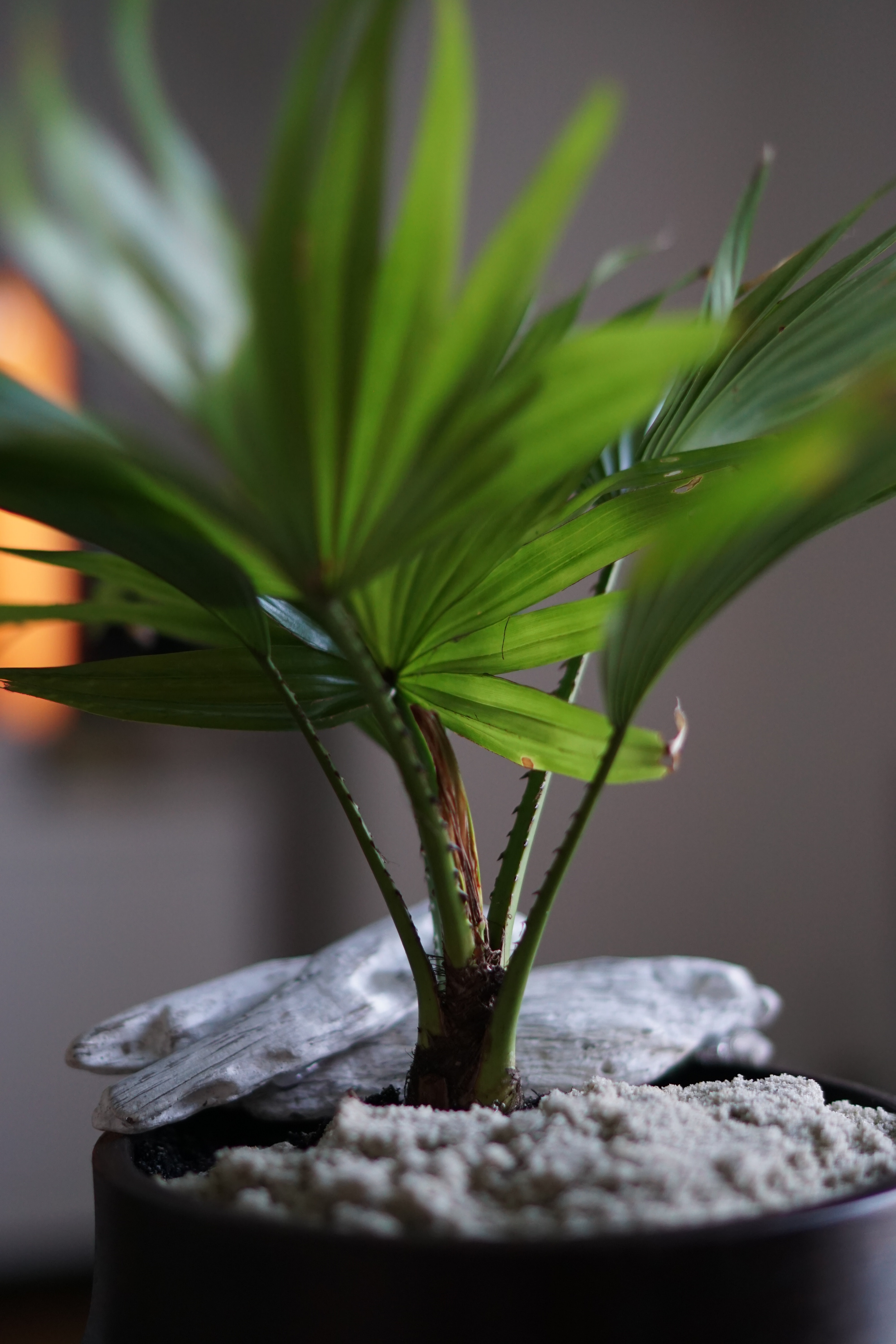 closeup photography of green leaf plant in pot