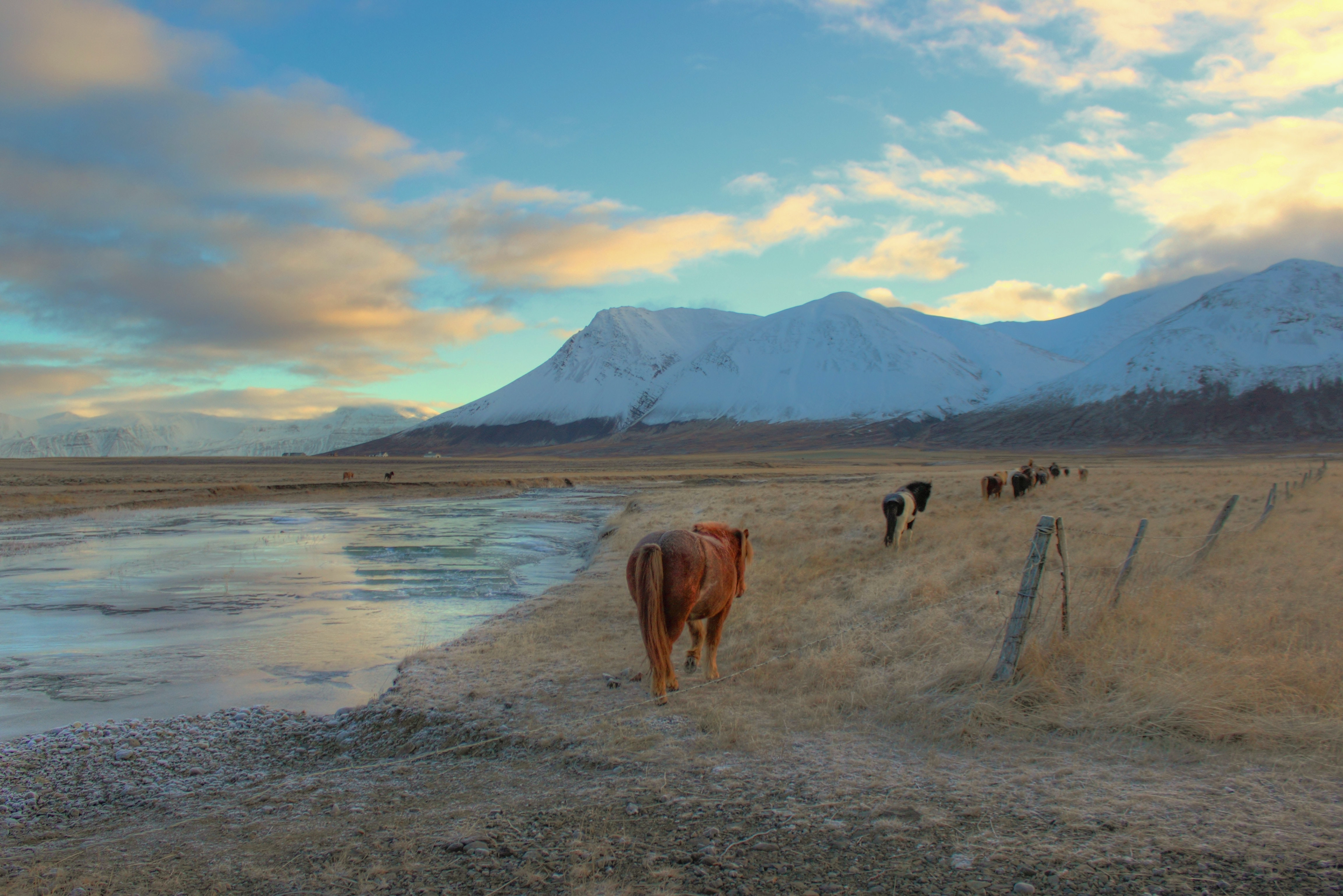 A head of horses walking in line between a wire fence and a small body of water
