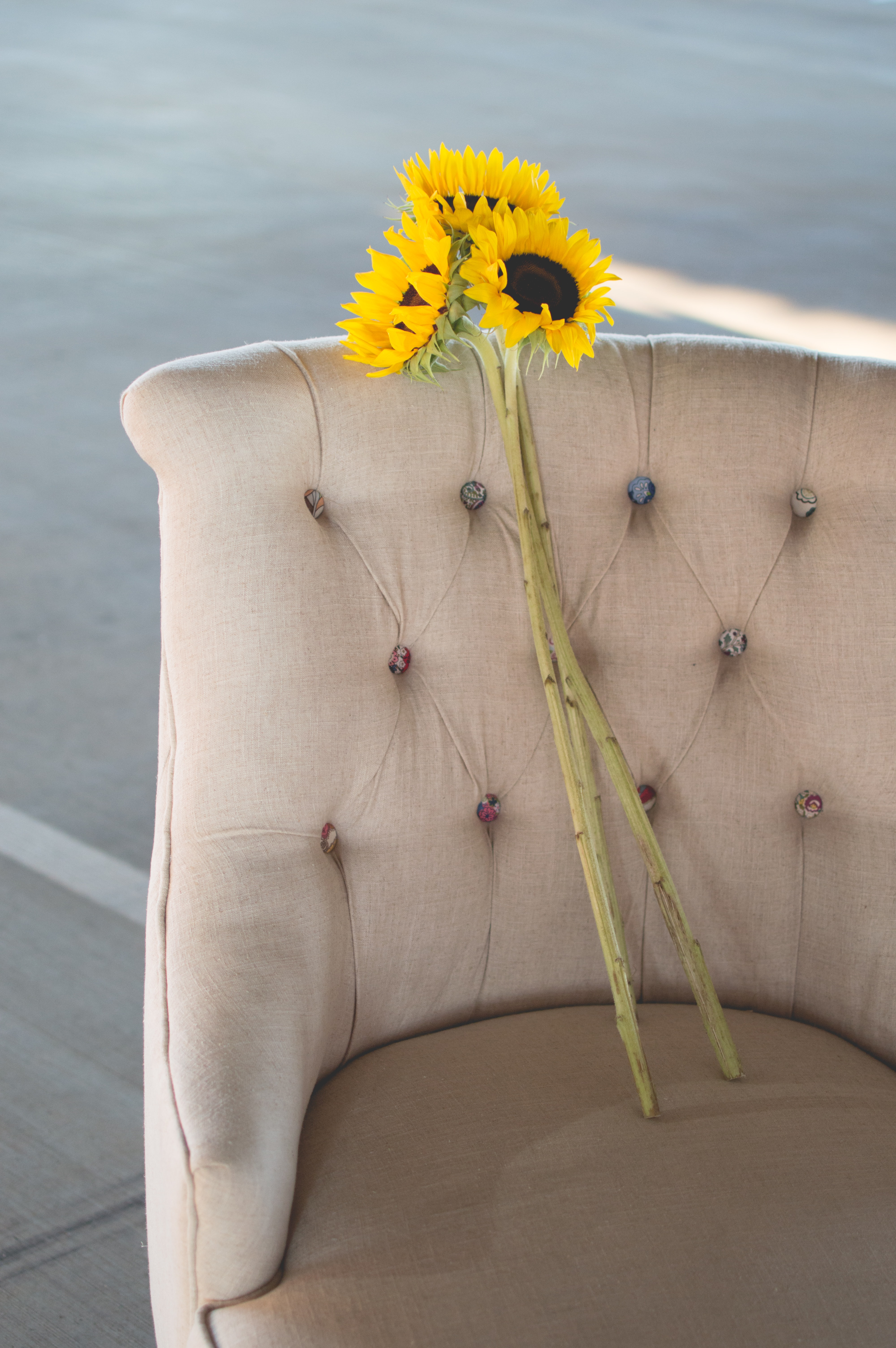 Three sunflowers on long stems in an armchair