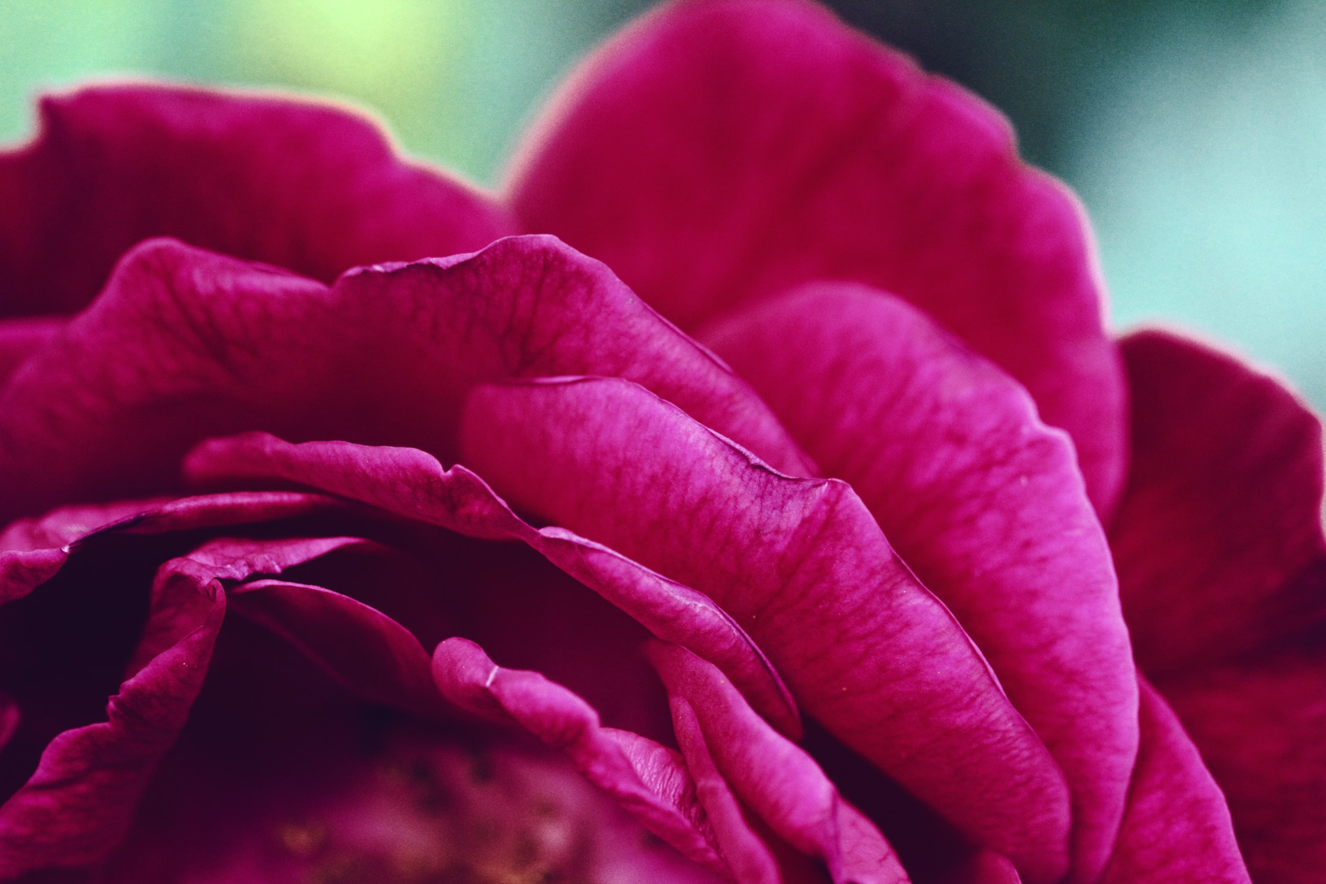 macro photography of red petaled flower