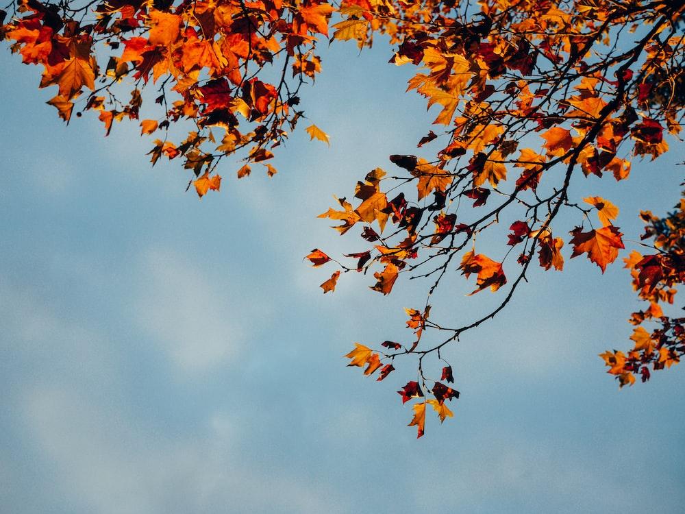 brown-leafed tree under blue sky
