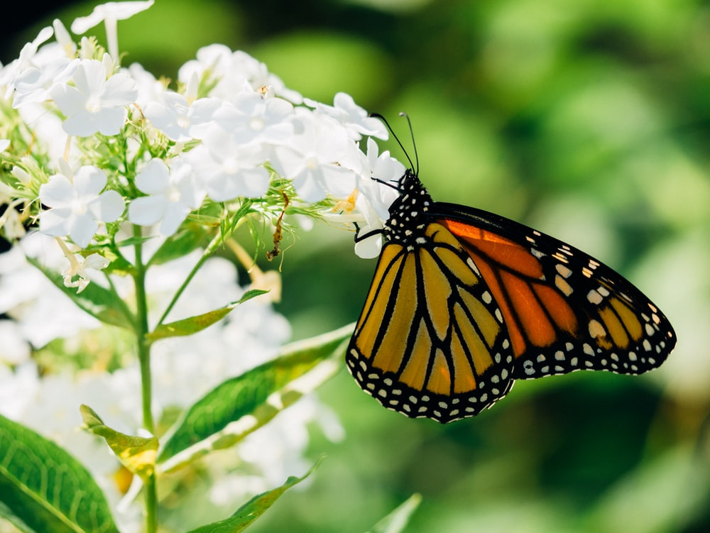 orange and white butterfly on flower