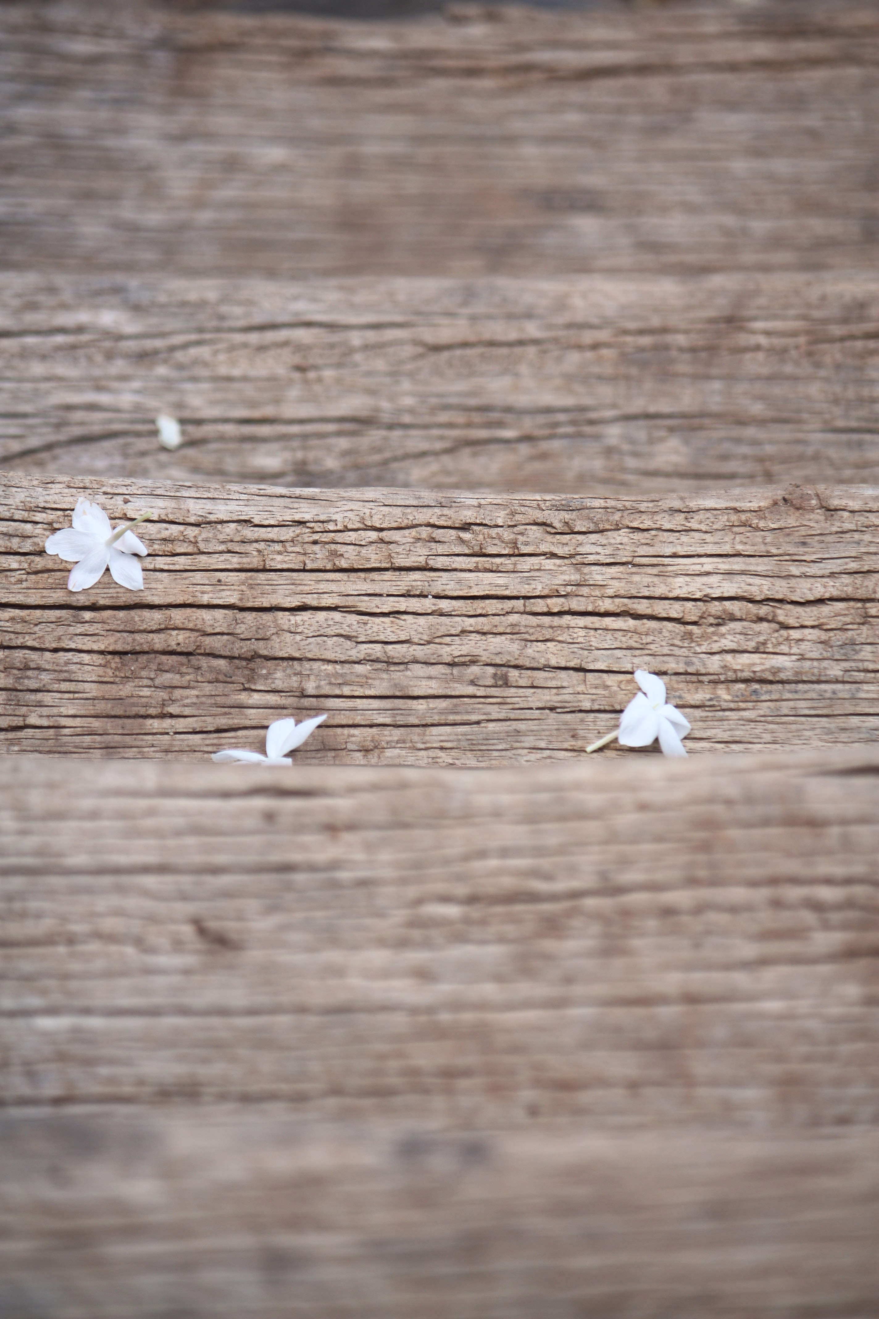 Small fallen flowers on a wooden step