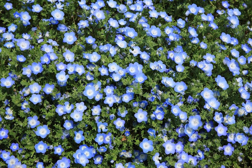 blue flowering plant