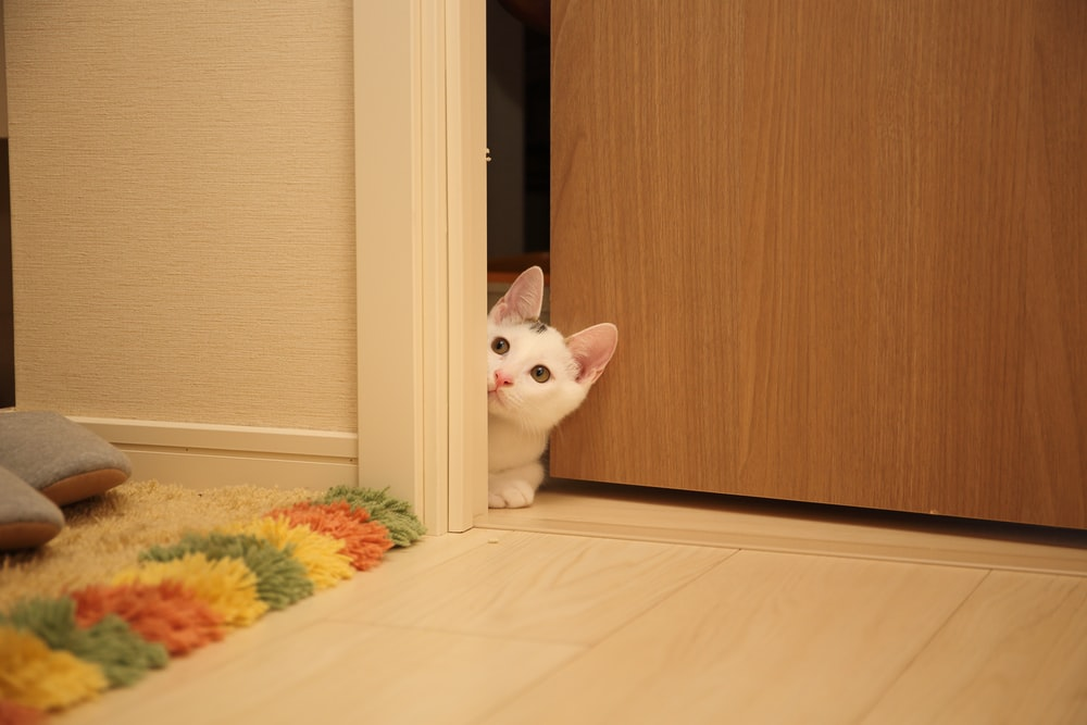 white cat sitting between wall and door