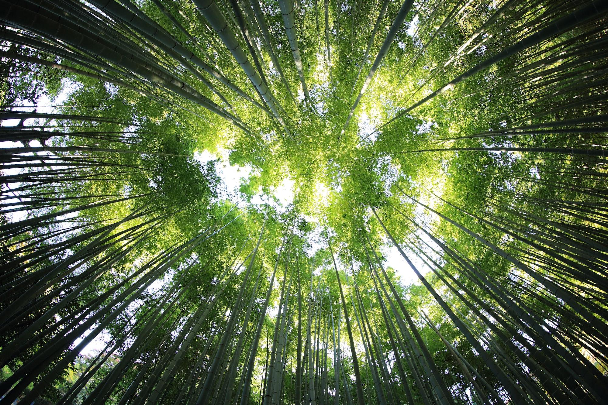 Listen to Random Forests