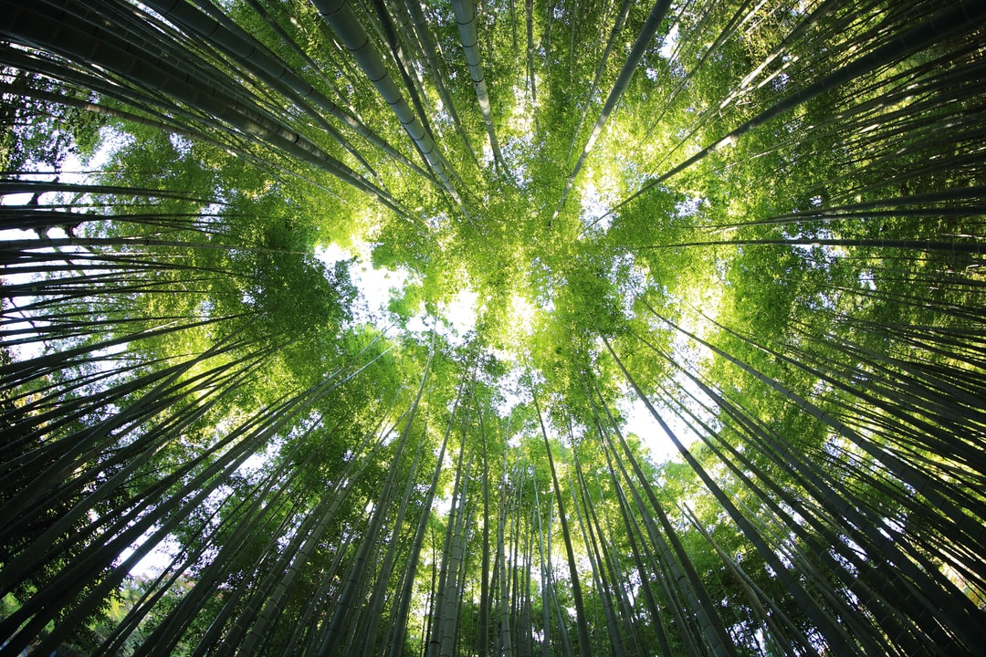 Our cars plant trees! How we offset carbon emissions through Greenfleet