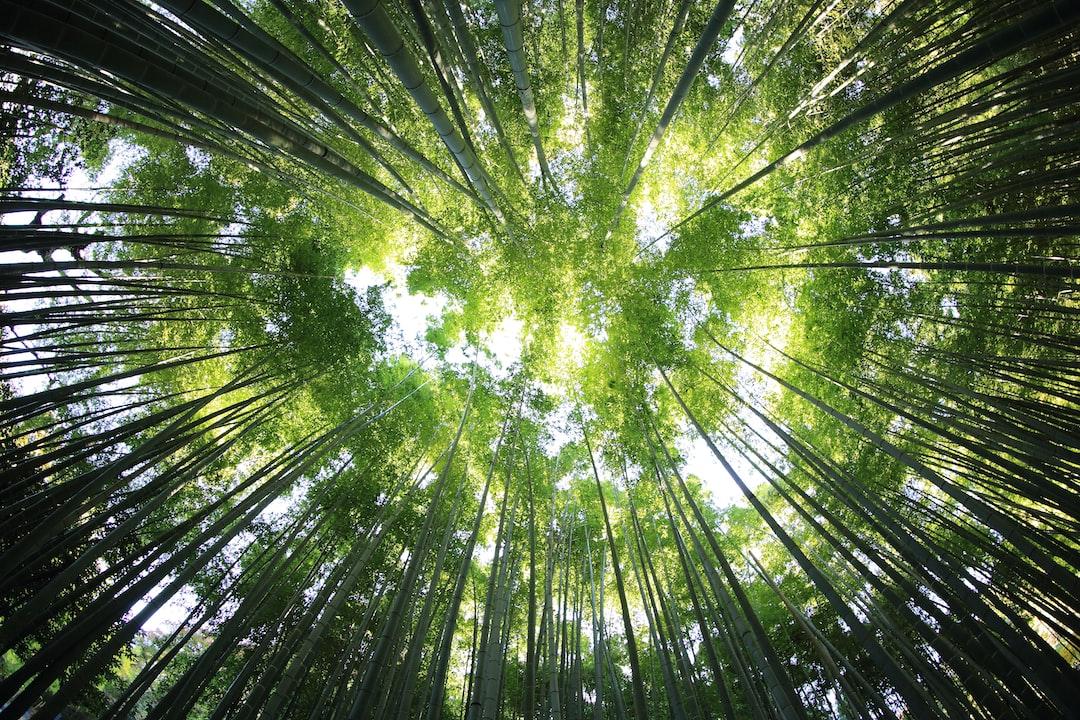 Bamboo leaf canopy