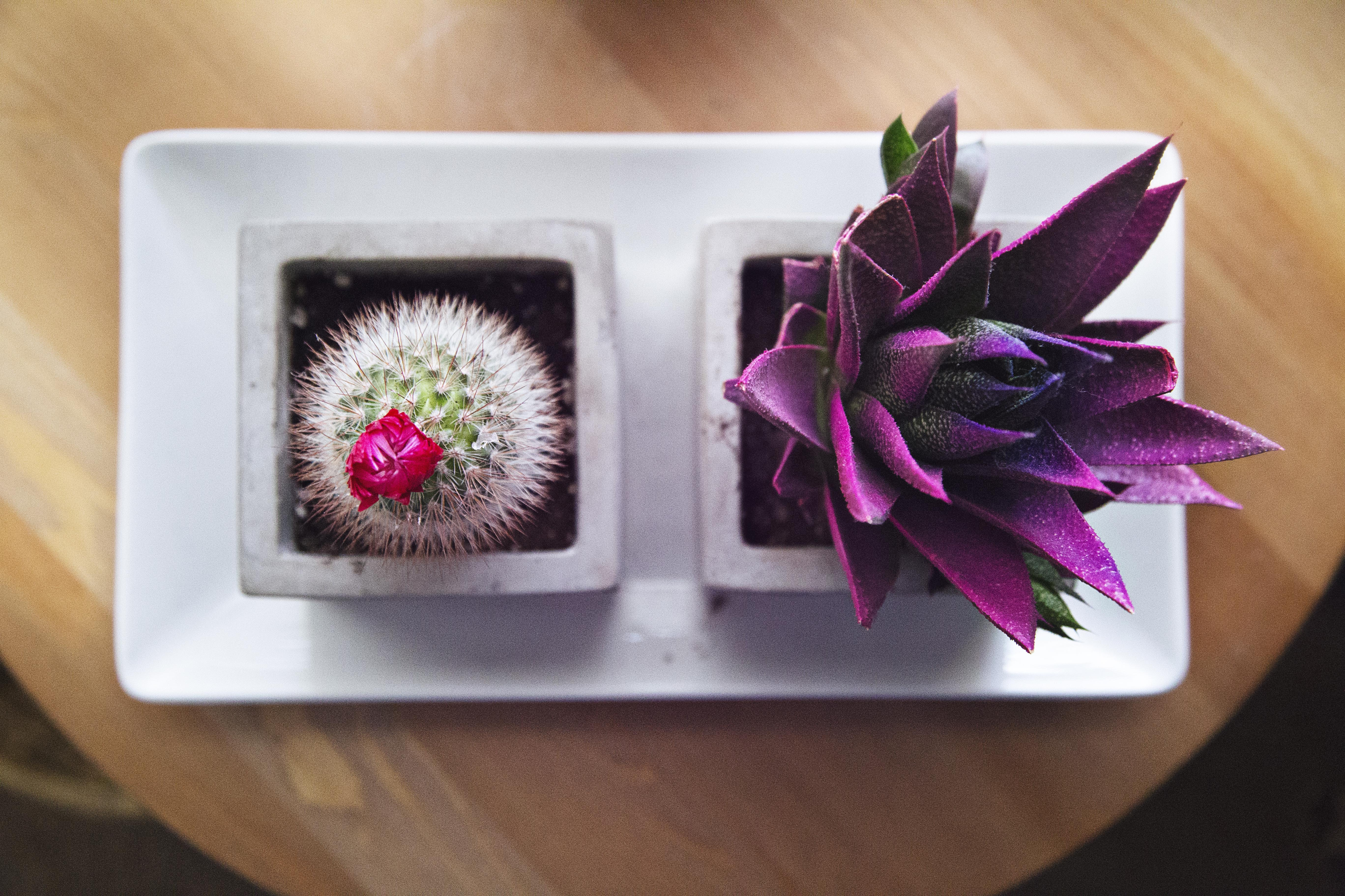 flatlay photograph of pink and purple succulent and cactus plant
