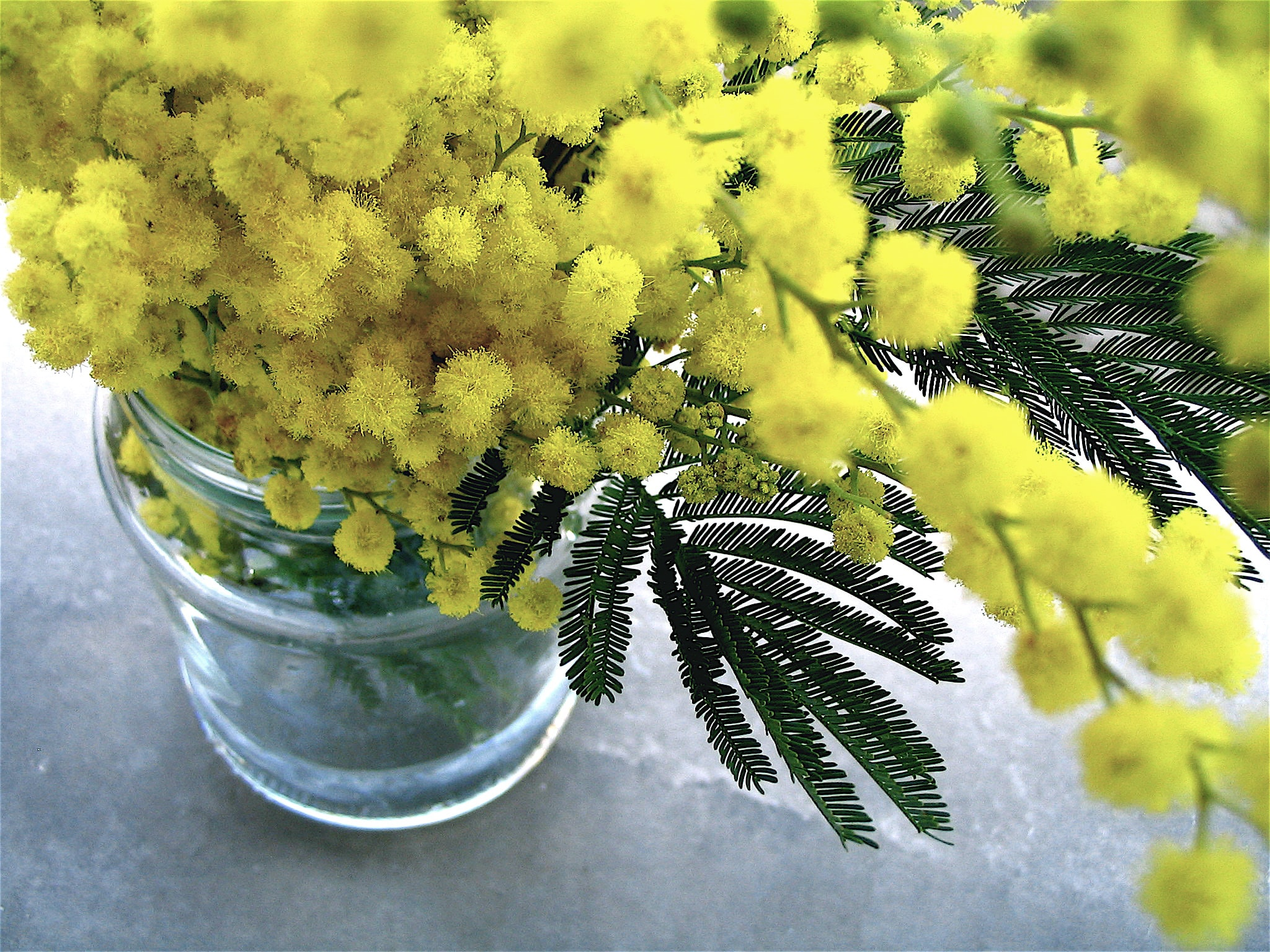 Close-up of a glass jar with rich yellow flowers
