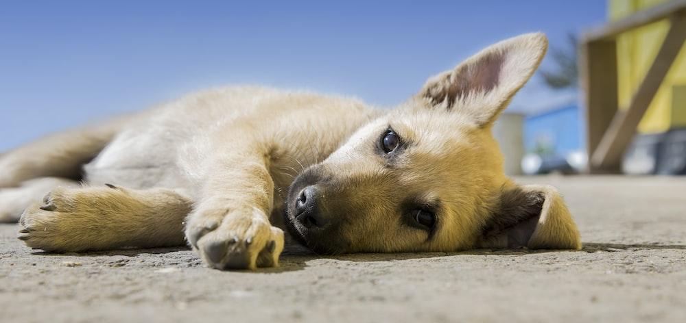 brown dog lying on pavement