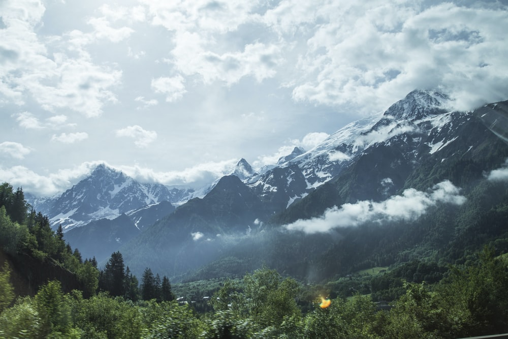 forest near mountain alps
