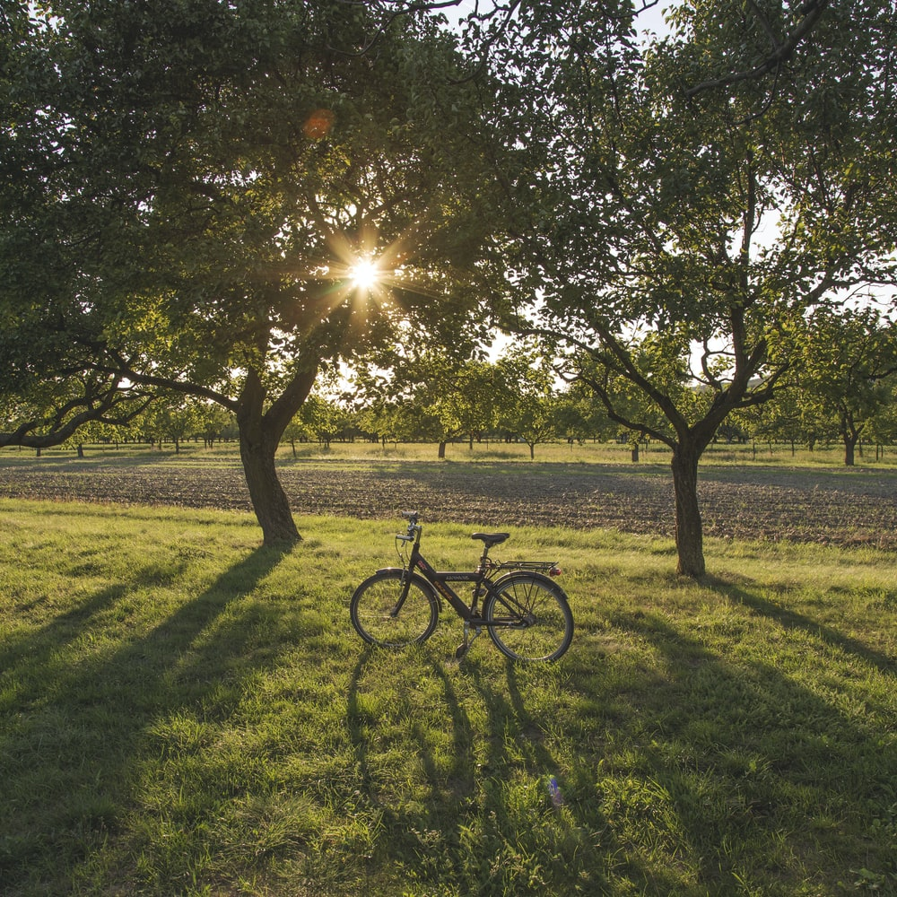 black bicycle on green grass field during sunset