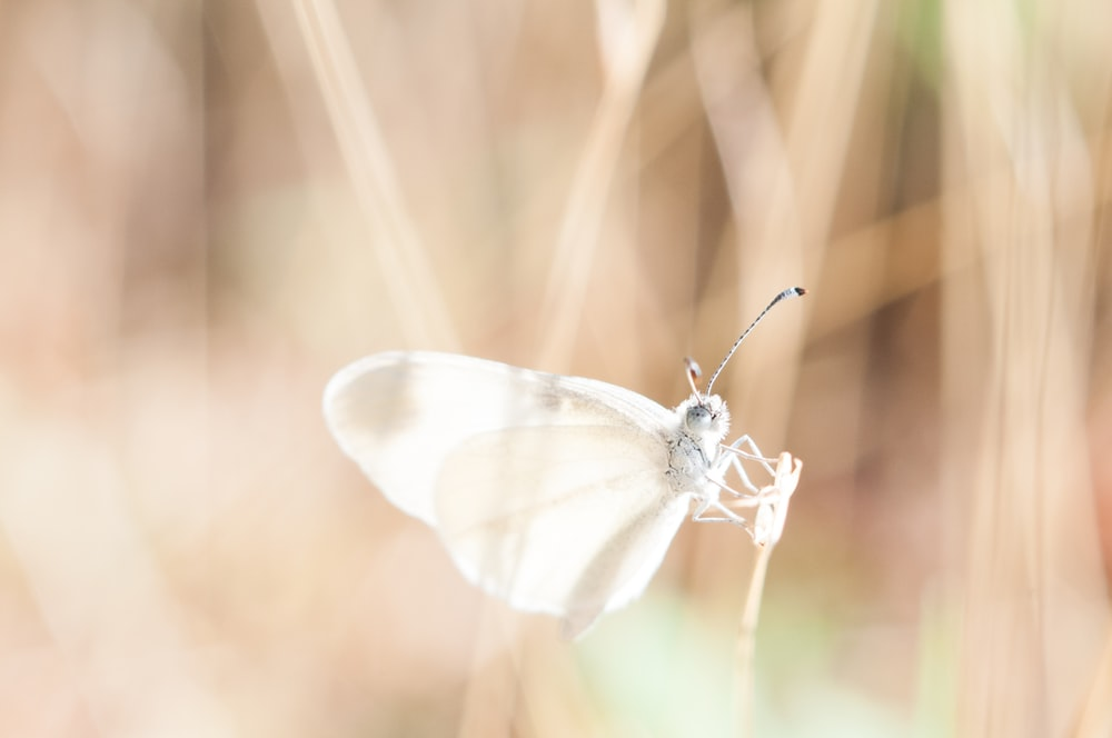 white butterfly on brown grass