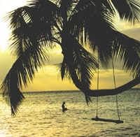 brown coconut tree near body of water
