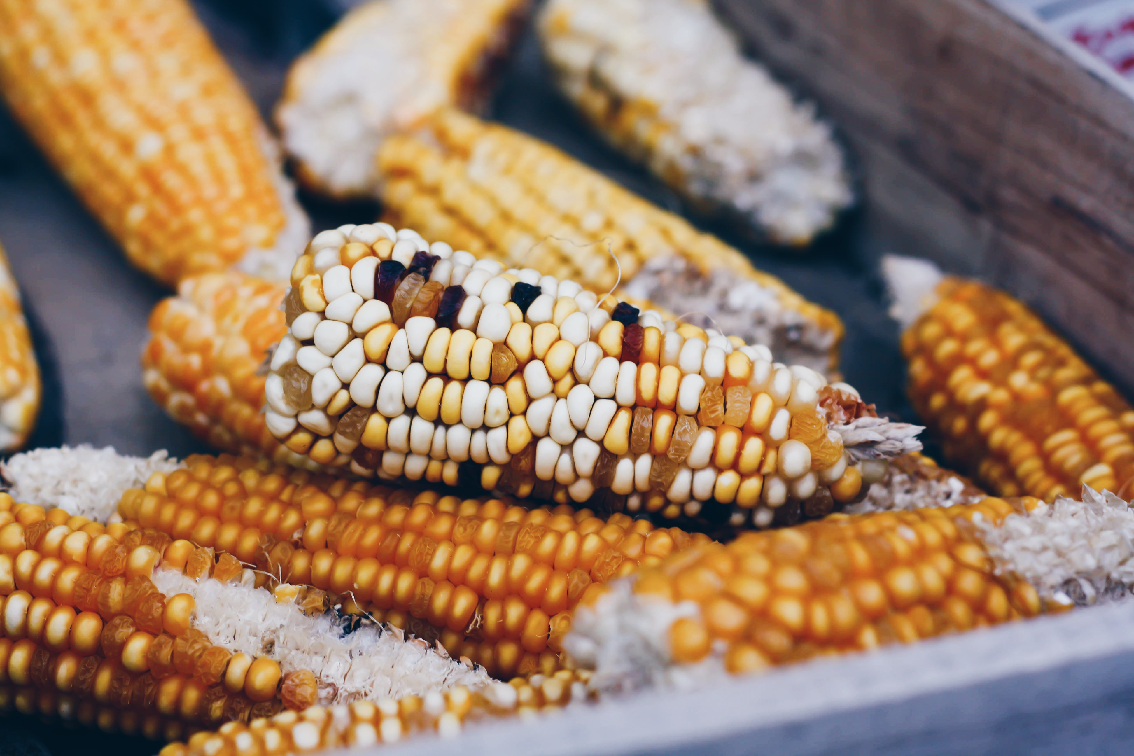 A batch of sweetcorn cobs in a wooden drawer