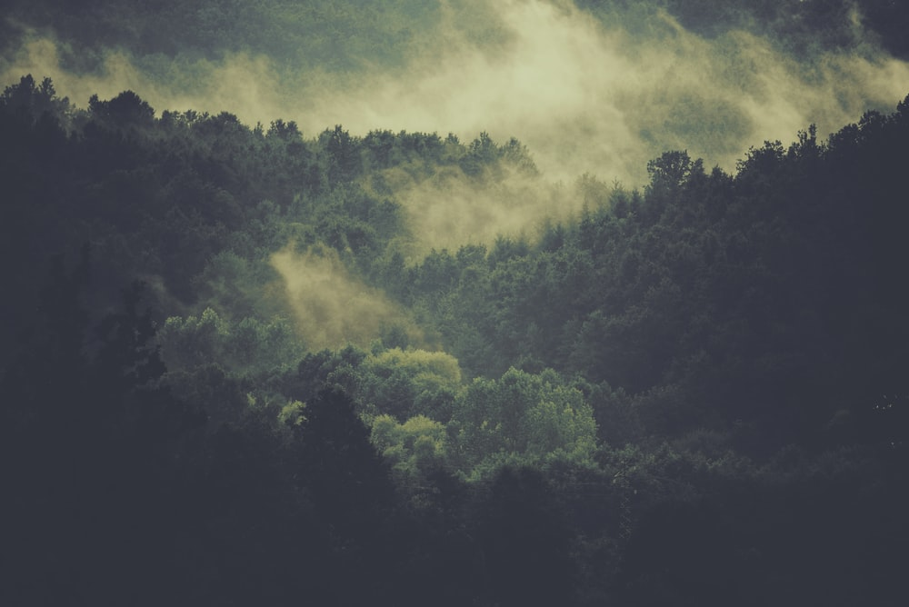 aerial photography of foggy mountain