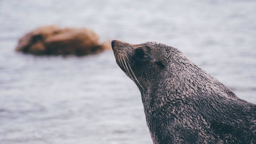 selective focus photography of black animal near body of water