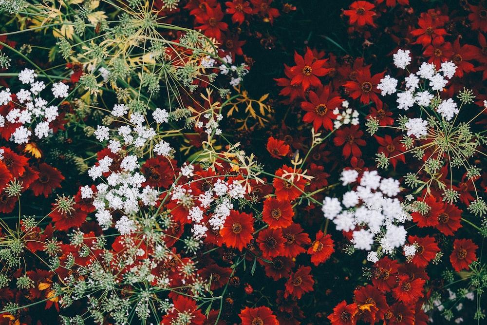 close up photo of garden