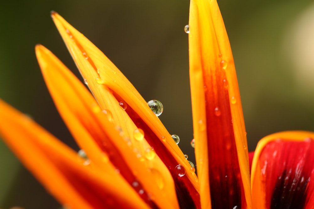 close-up photo of dew on flower