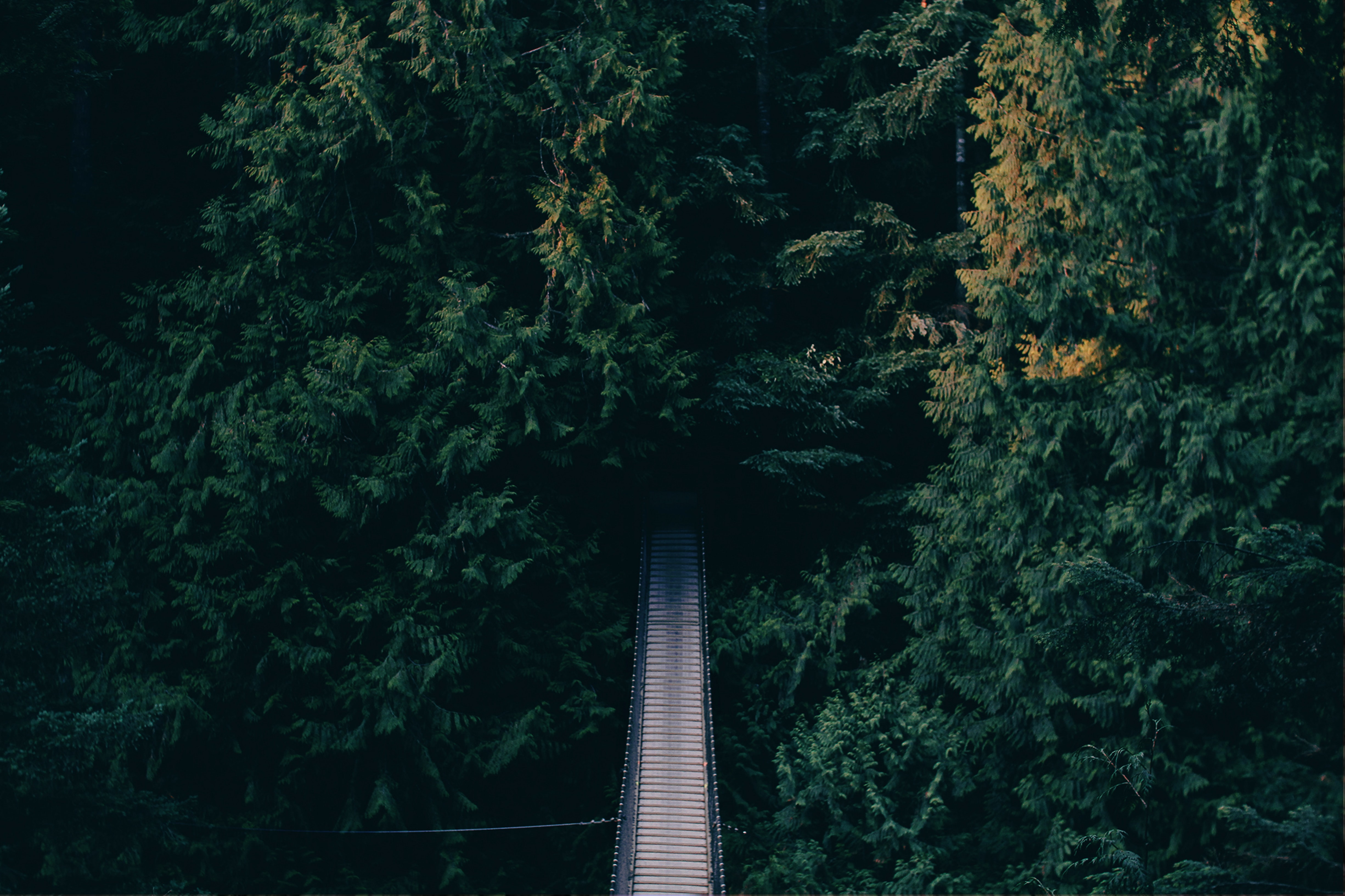 A wooden suspension bridge leading into a dense forest