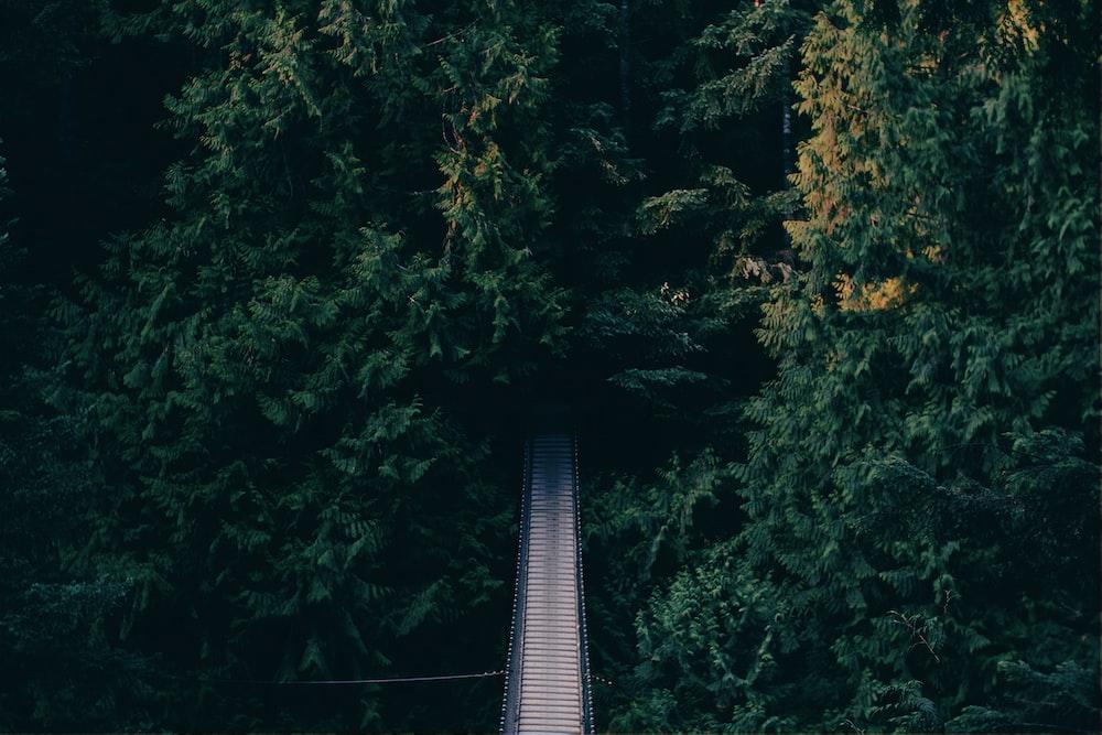 aerial photography of hanging bridge near trees