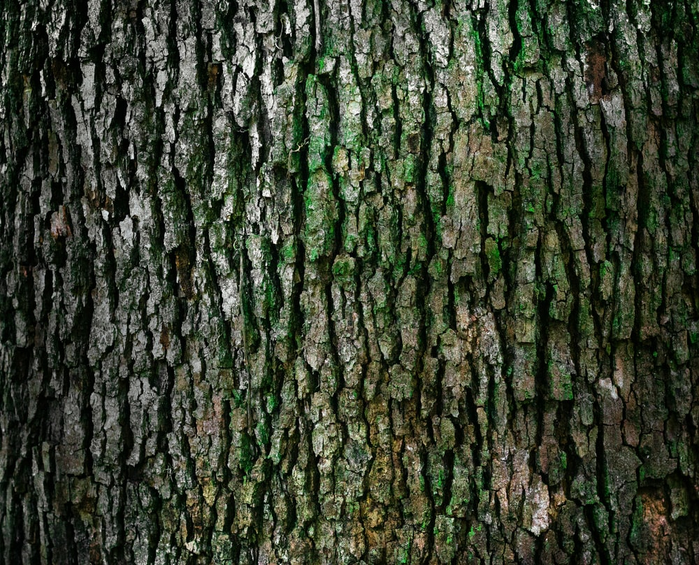 closeup photo of log